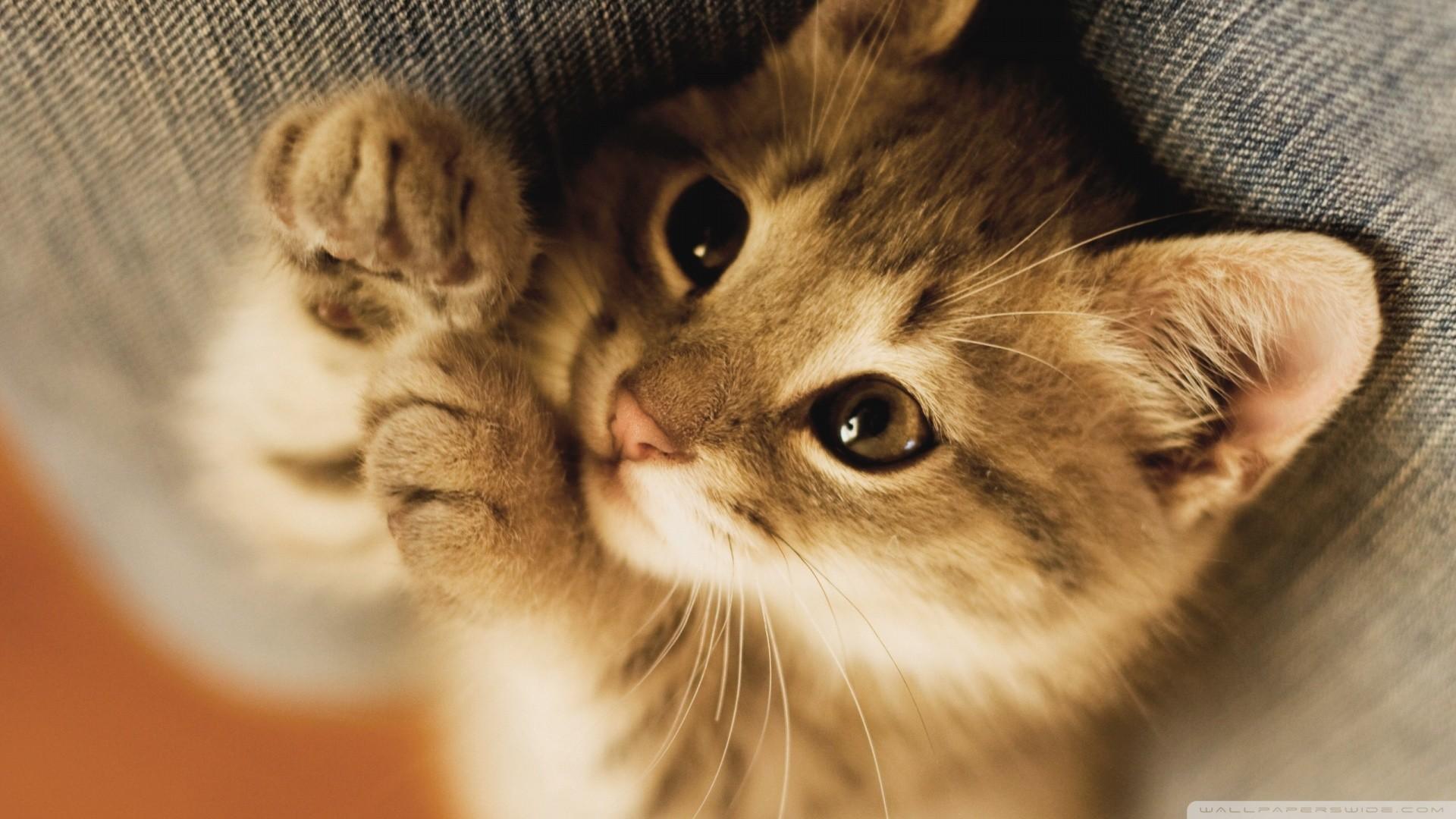 Cute kitten photo gallery Erotic Girls Gallery - Photo Series