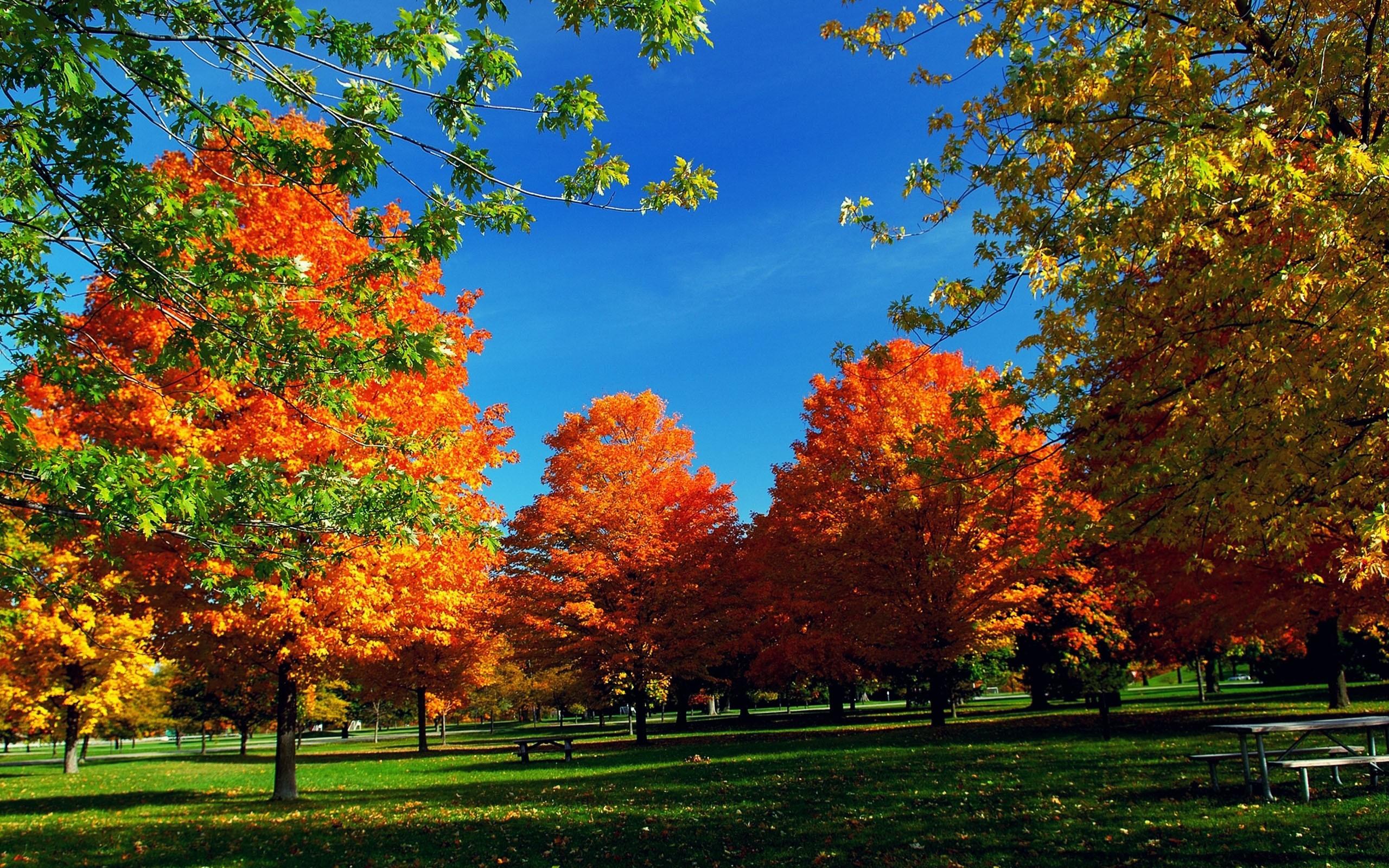 Autumn Wallpaper Widescreen 1 Download Free Amazing High