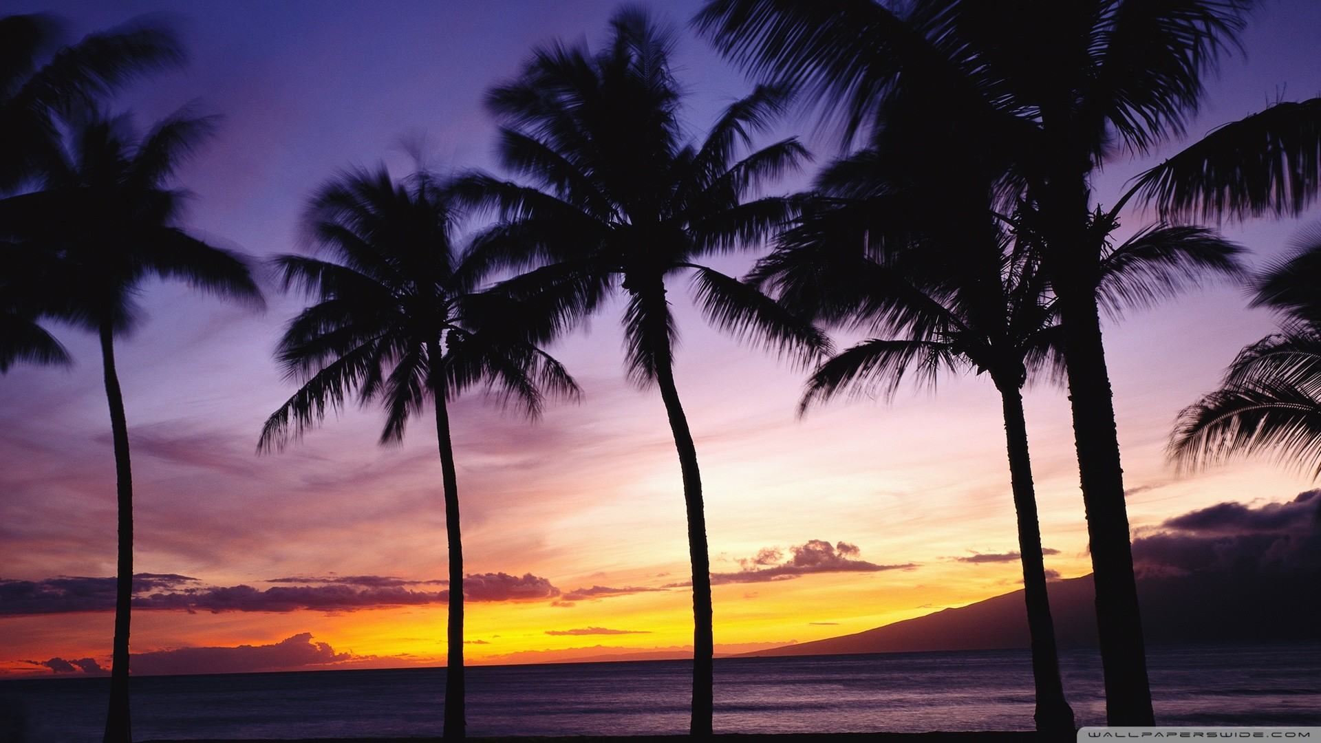 Palm Tree Desktop Wallpaper Wallpapertag