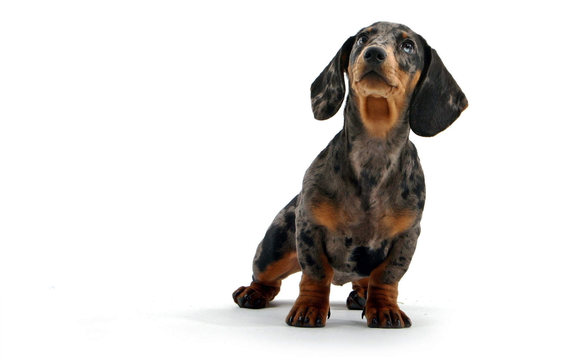 54 Dog Backgrounds Download Free Amazing Wallpapers Of Dogs For