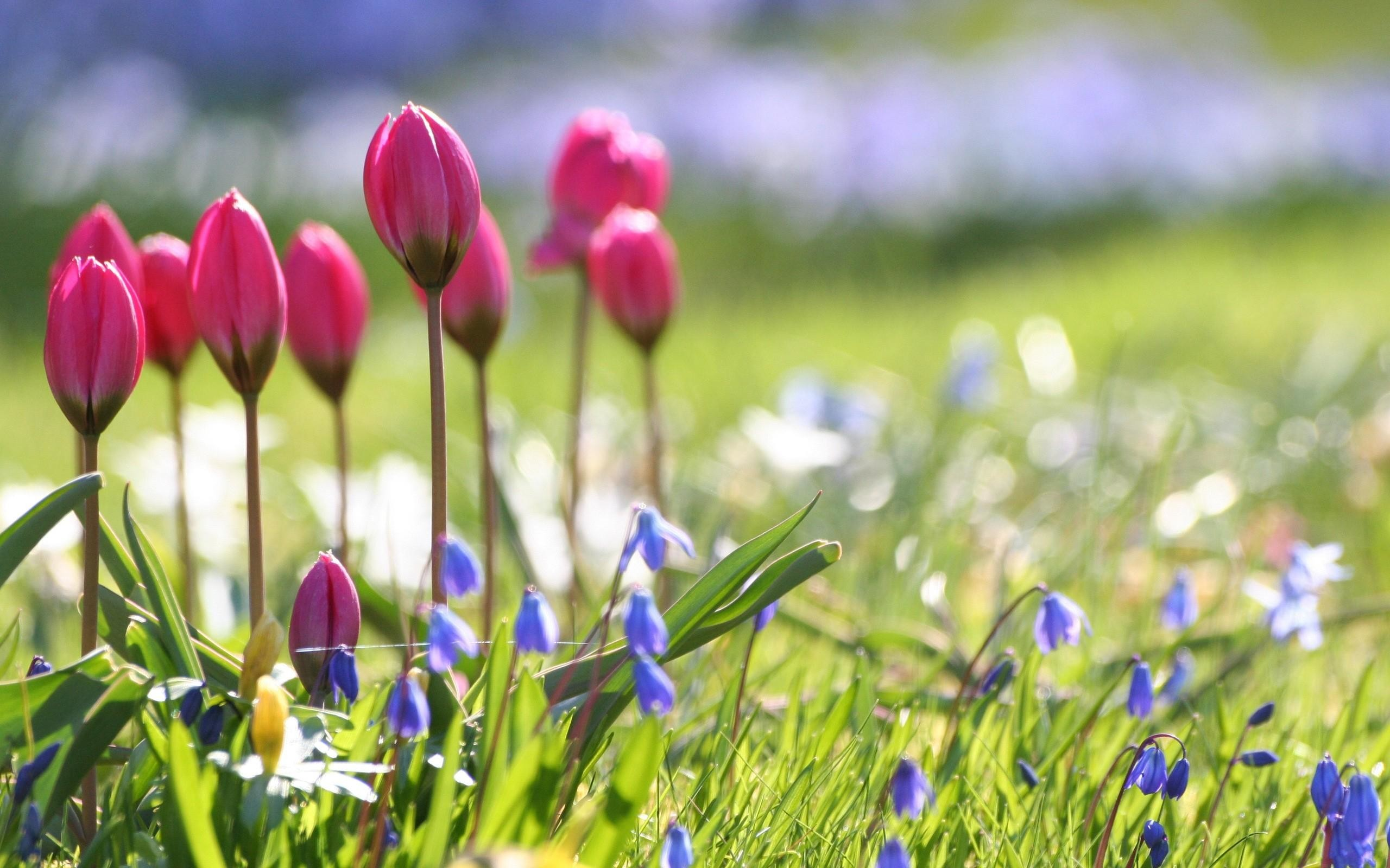 Spring Flowers Background Desktop