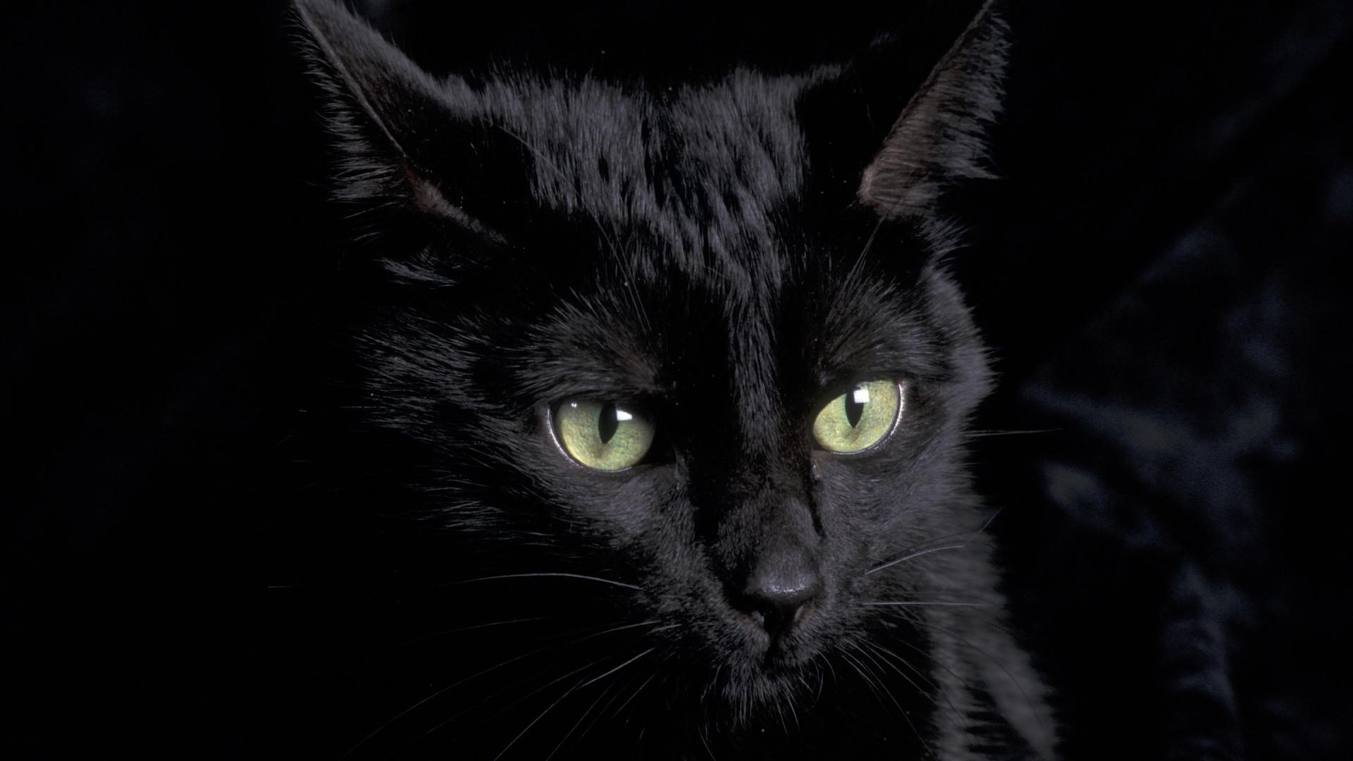 Black Cat Wallpapers Wallpapertag