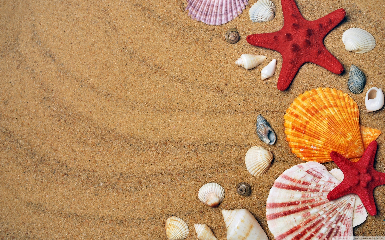 holiday background images 183��