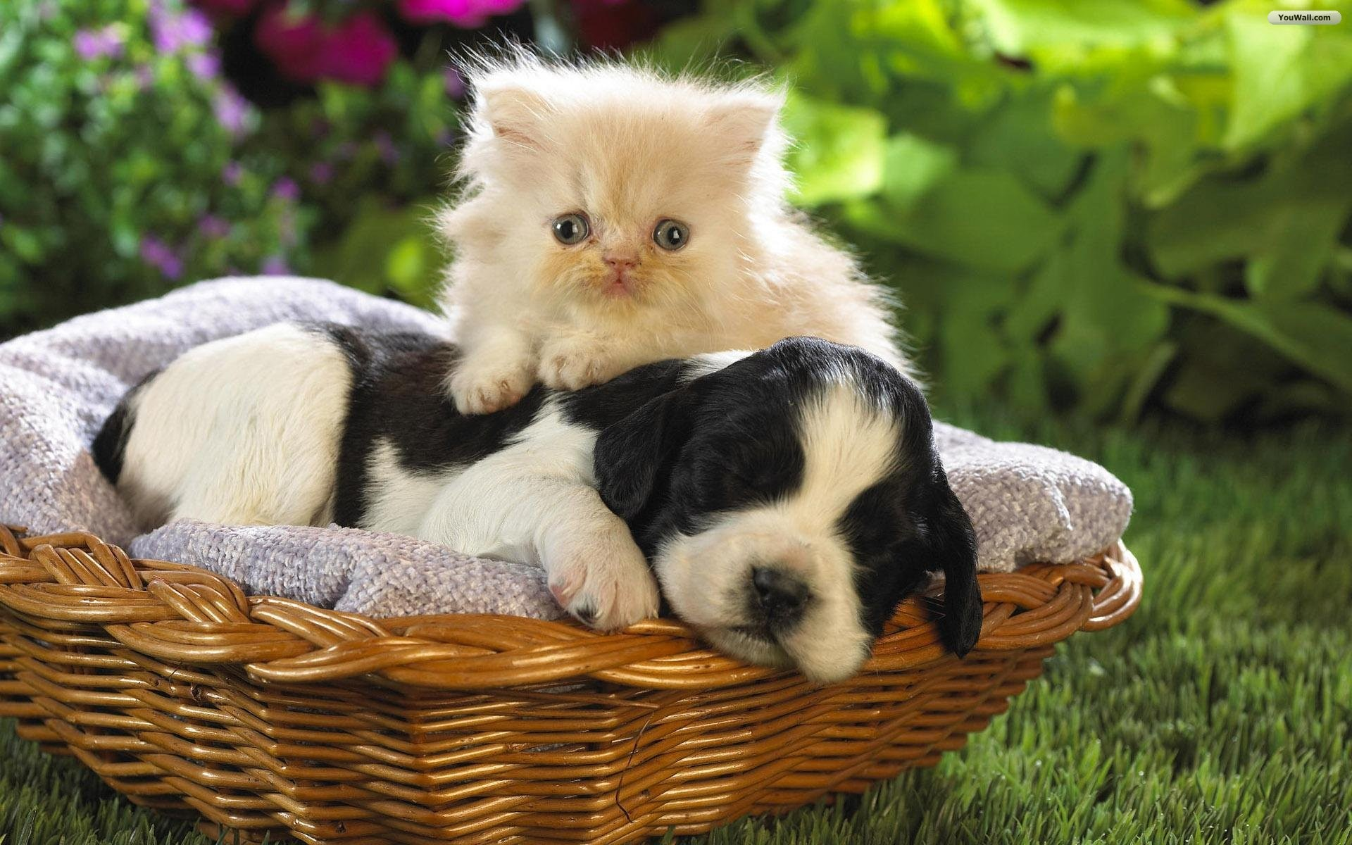 Cute Dog Wallpapers Android Apps on Google Play HD Wallpapers