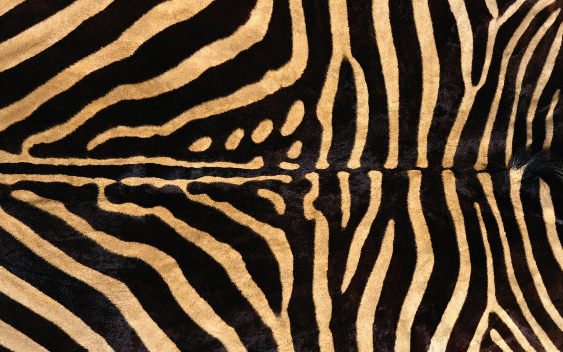 Zebra background download free stunning hd wallpapers - Pink zebra wallpaper for iphone ...
