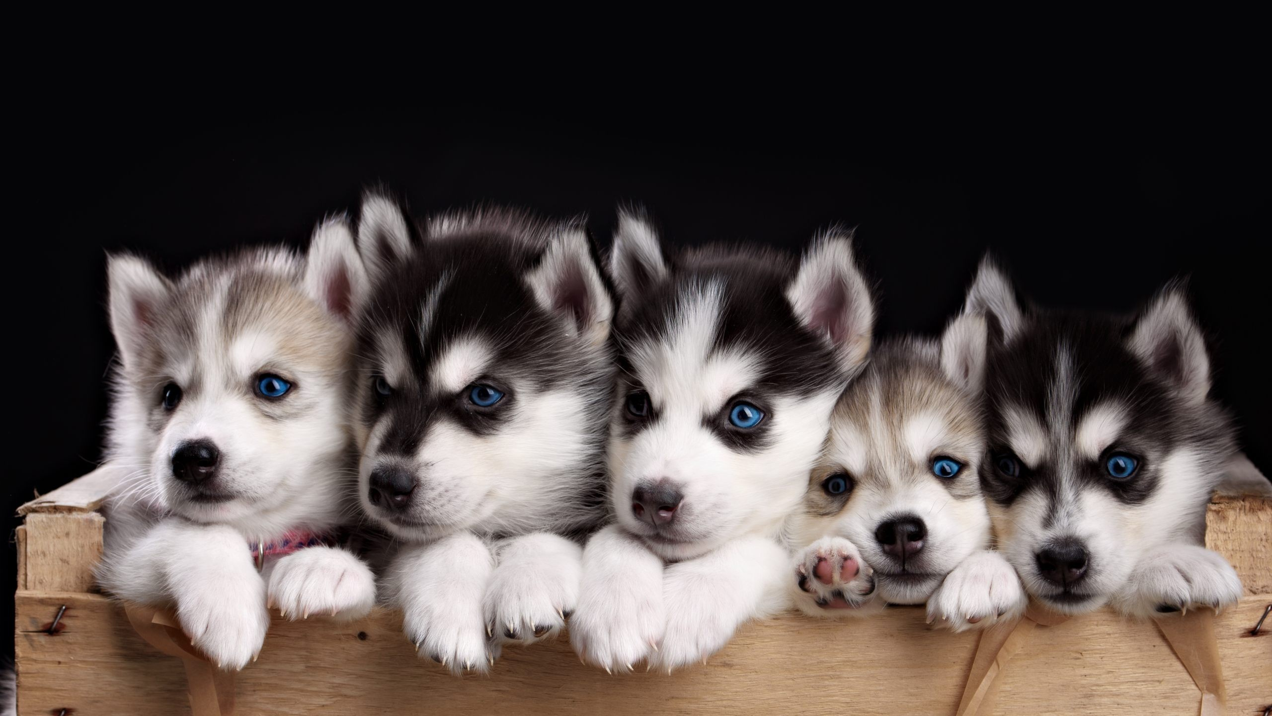 Wallpaper Of Puppies For Windows Snow