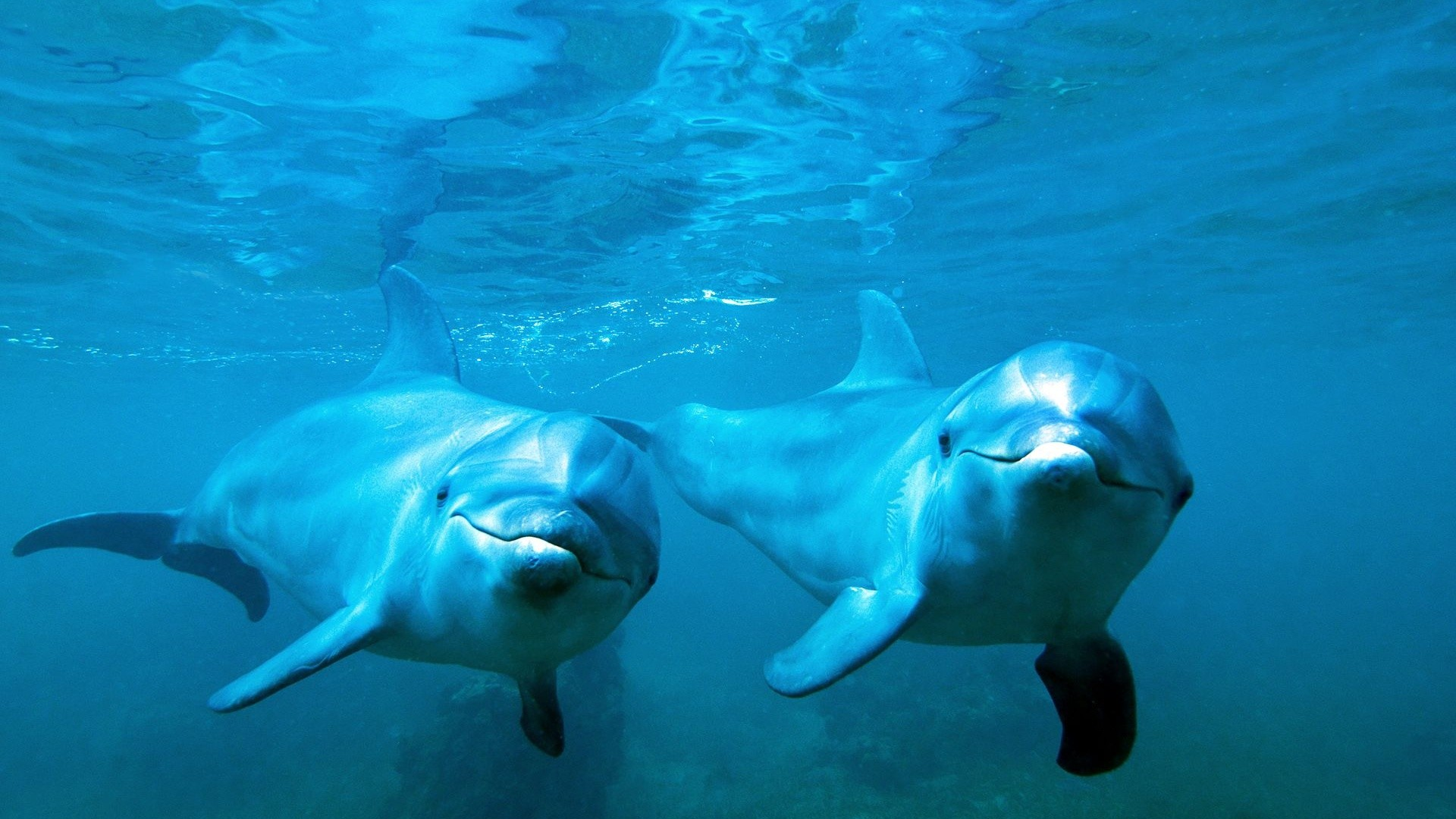 1920x1080 dolphin wallpapers 18 hd dolphin desktop wallpapers for free download dolphin