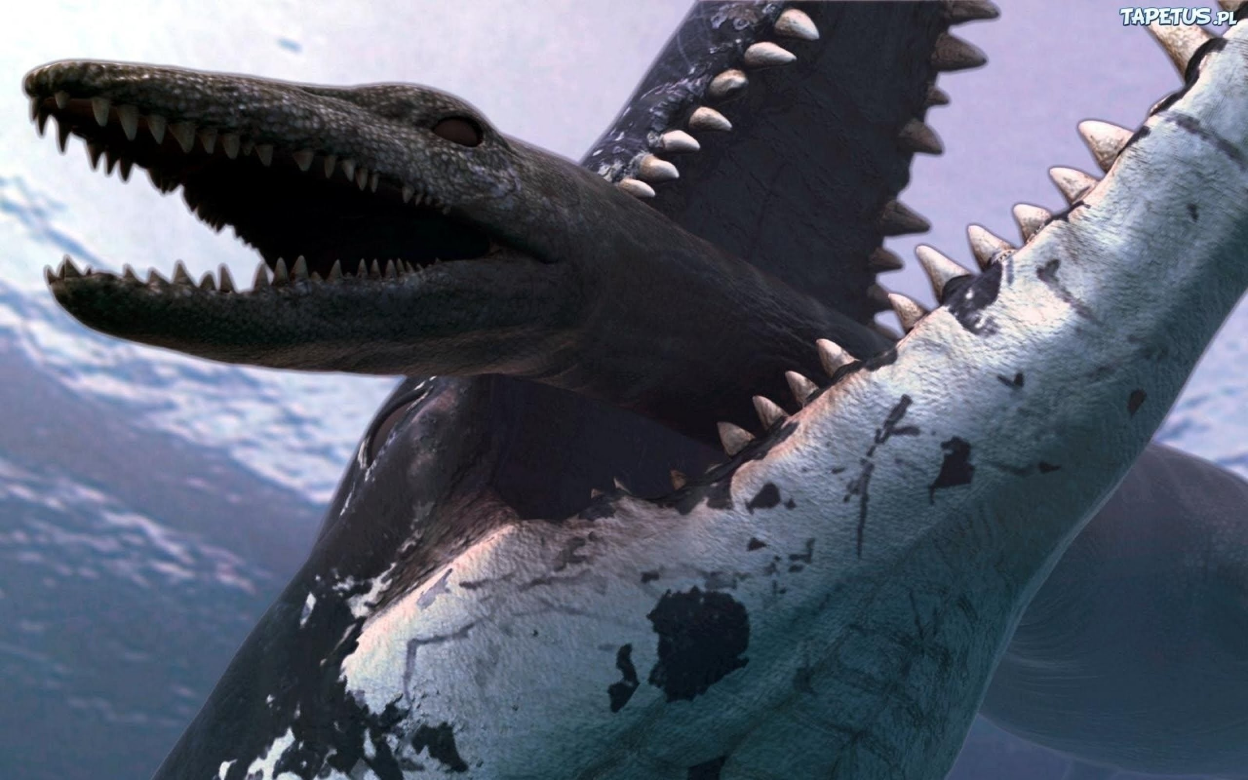 Megalodon Wallpapers ·①