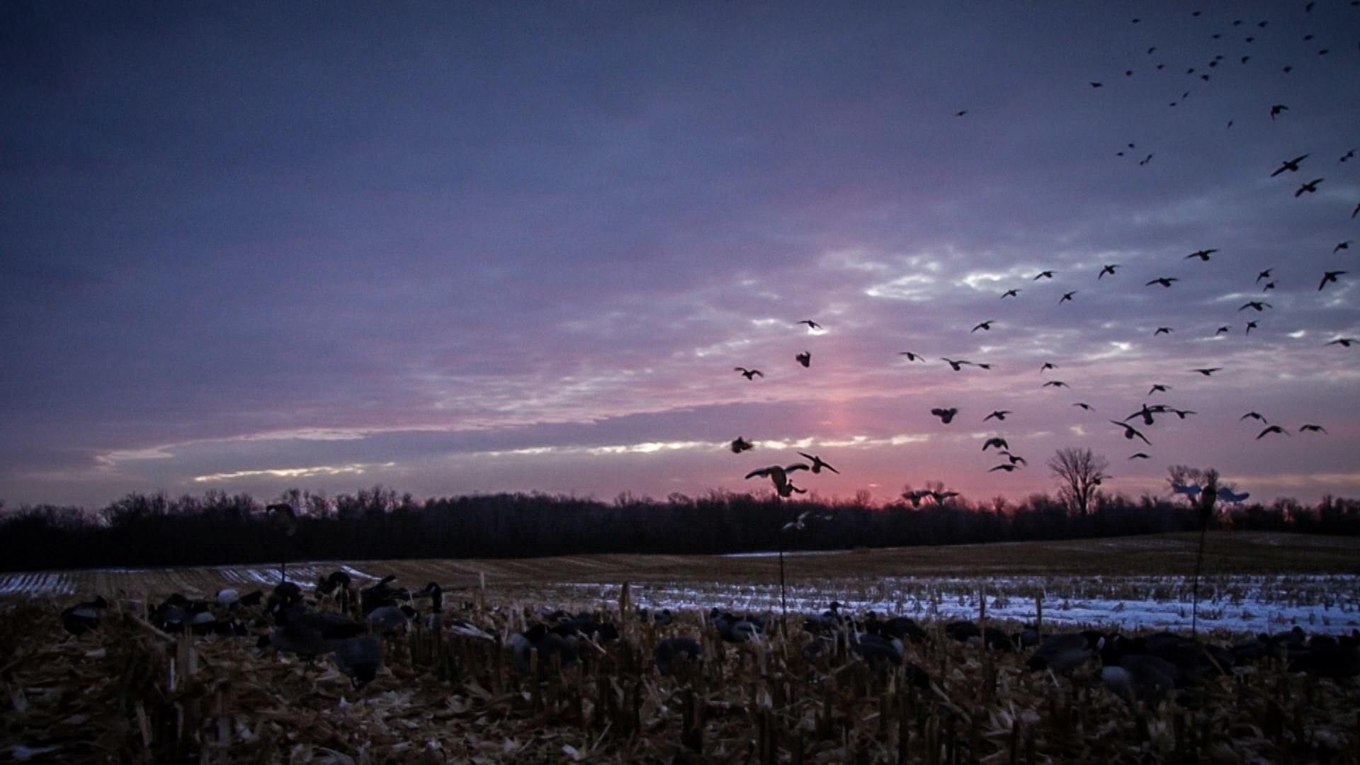 Duck Hunting Wallpaper Duck Hunting Ba...