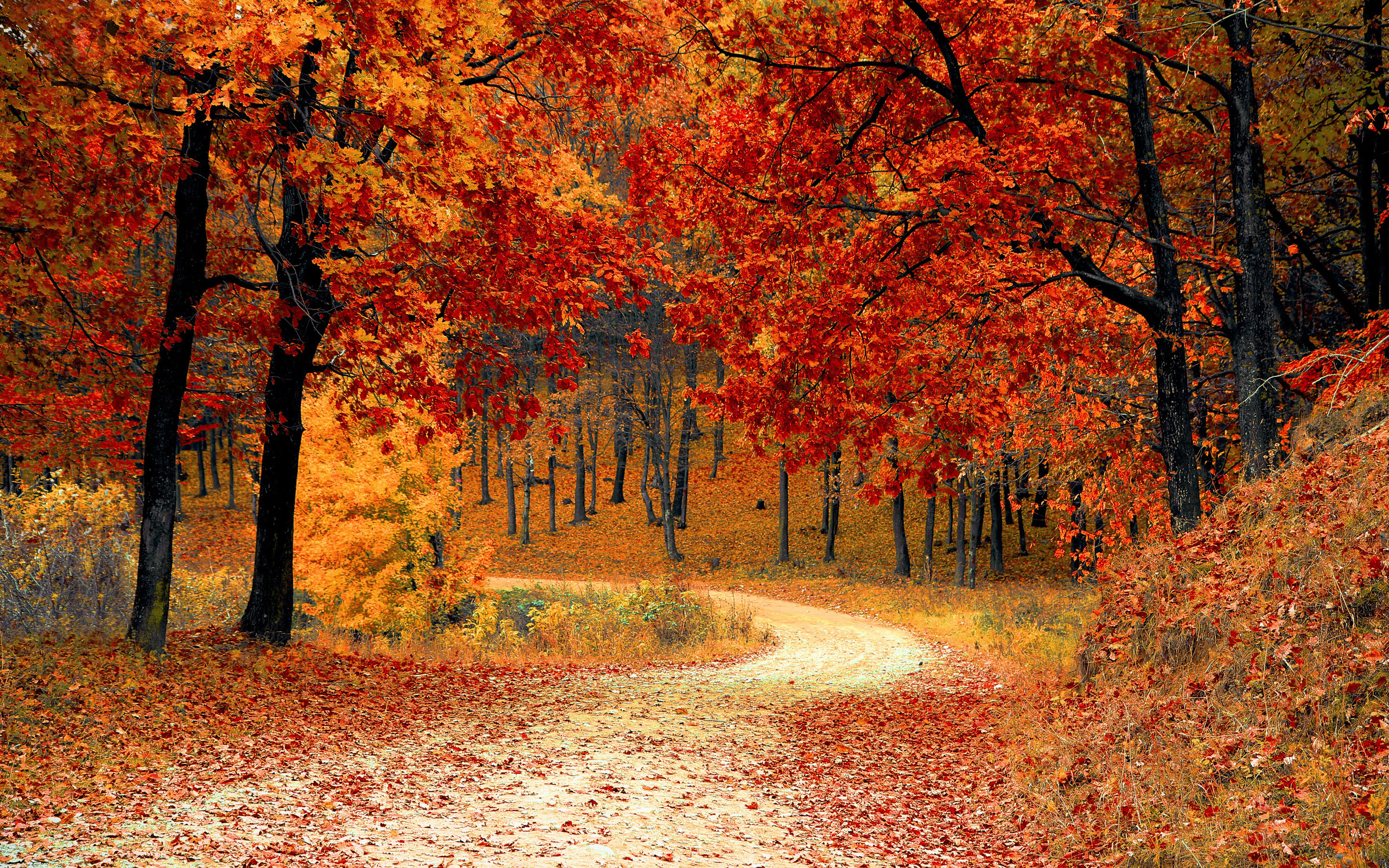 Great Wallpaper Harry Potter Autumn - 442107-full-size-autumn-hd-wallpapers-2880x1800-for-windows  Pictures_547122.jpg