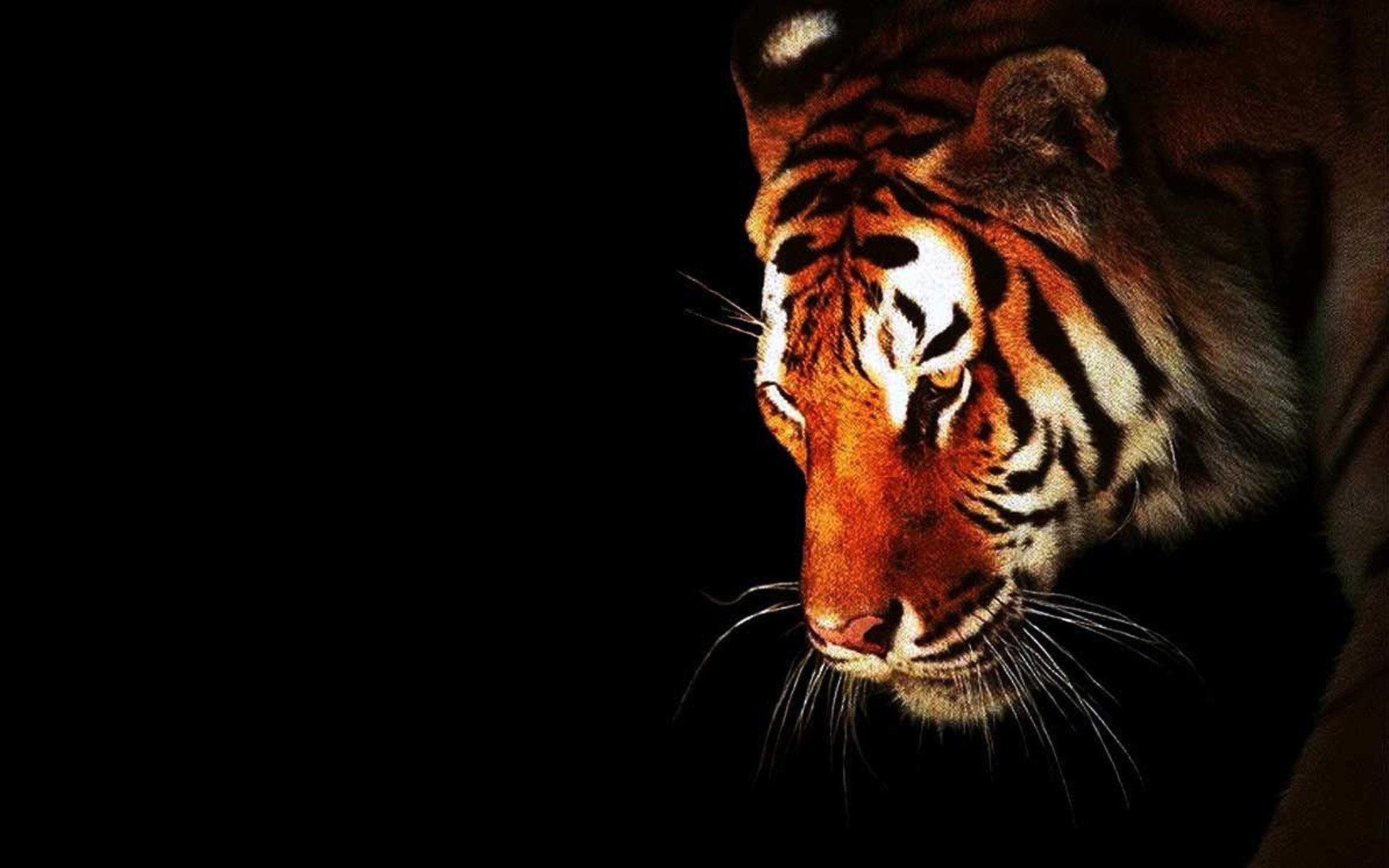 Cool Tiger Wallpapers Hd