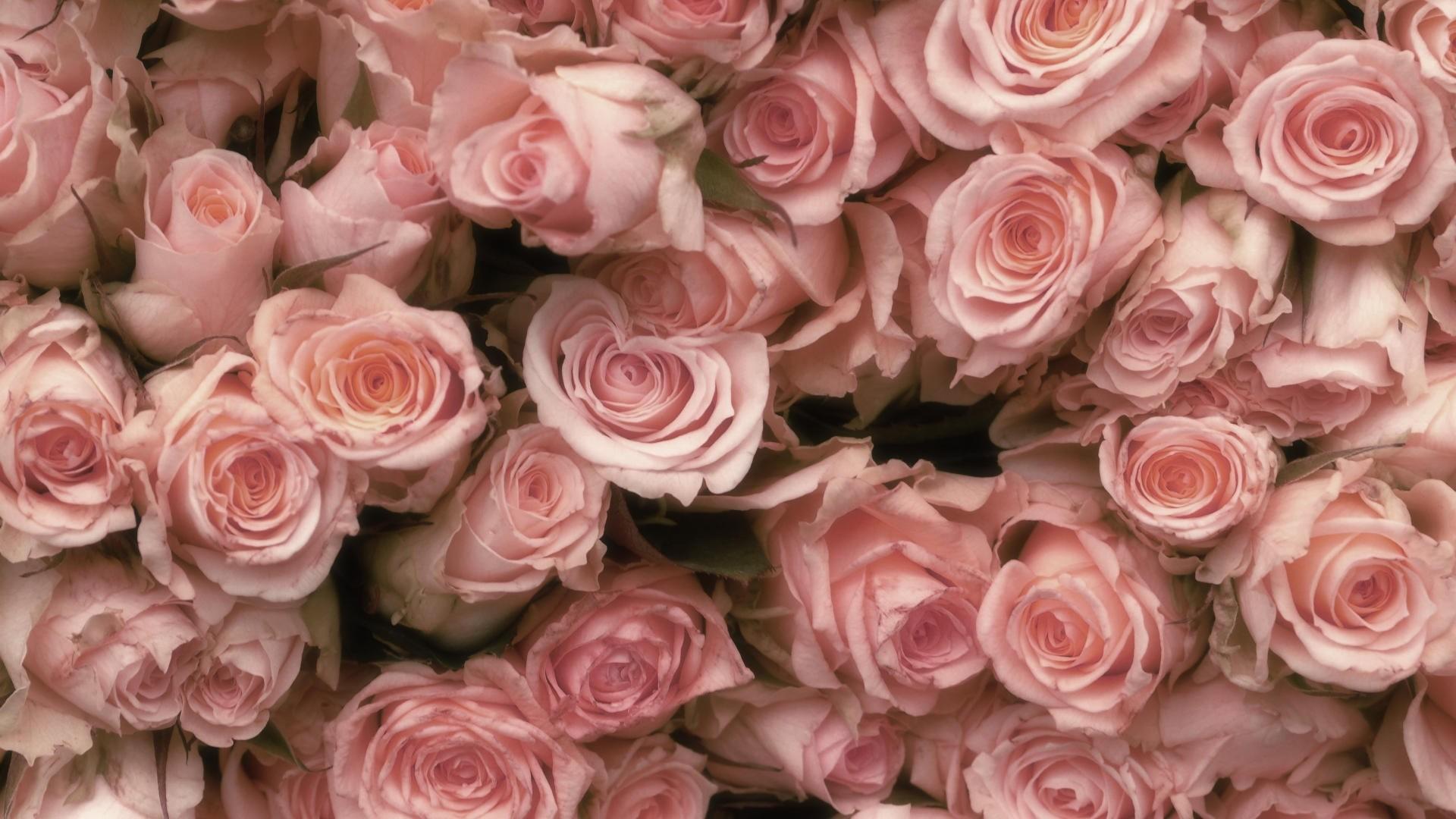 Pink Rose Backgrounds ·① WallpaperTag