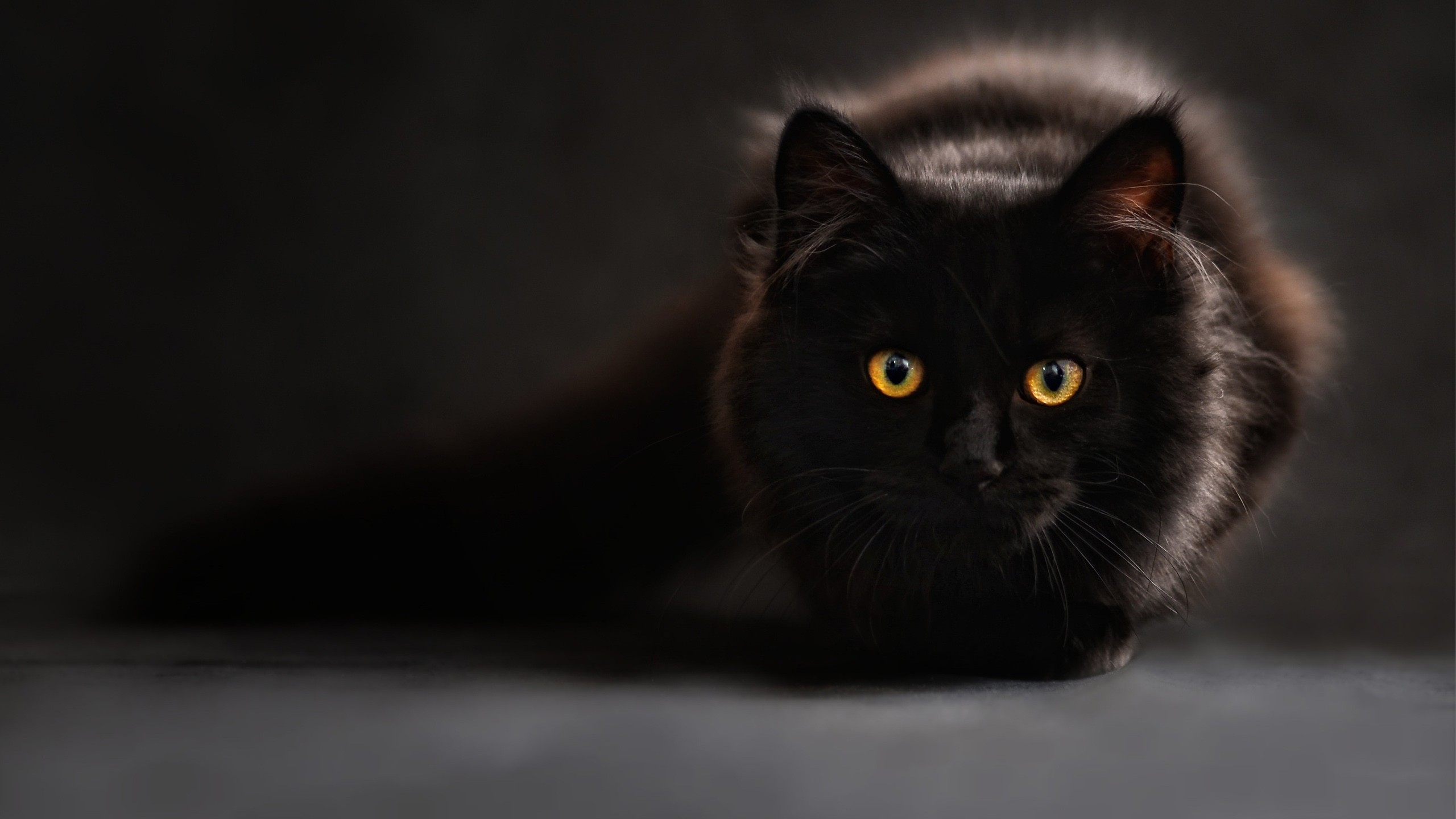 Black Cat Wallpapers .