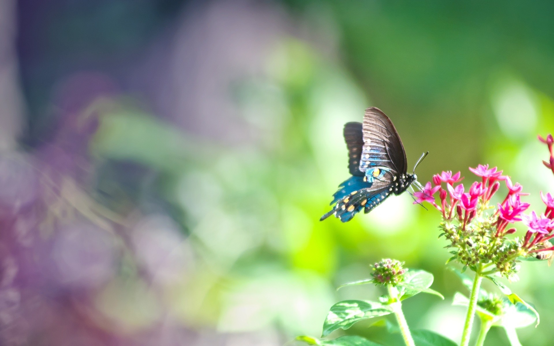 Blue Butterfly Background ·① WallpaperTag
