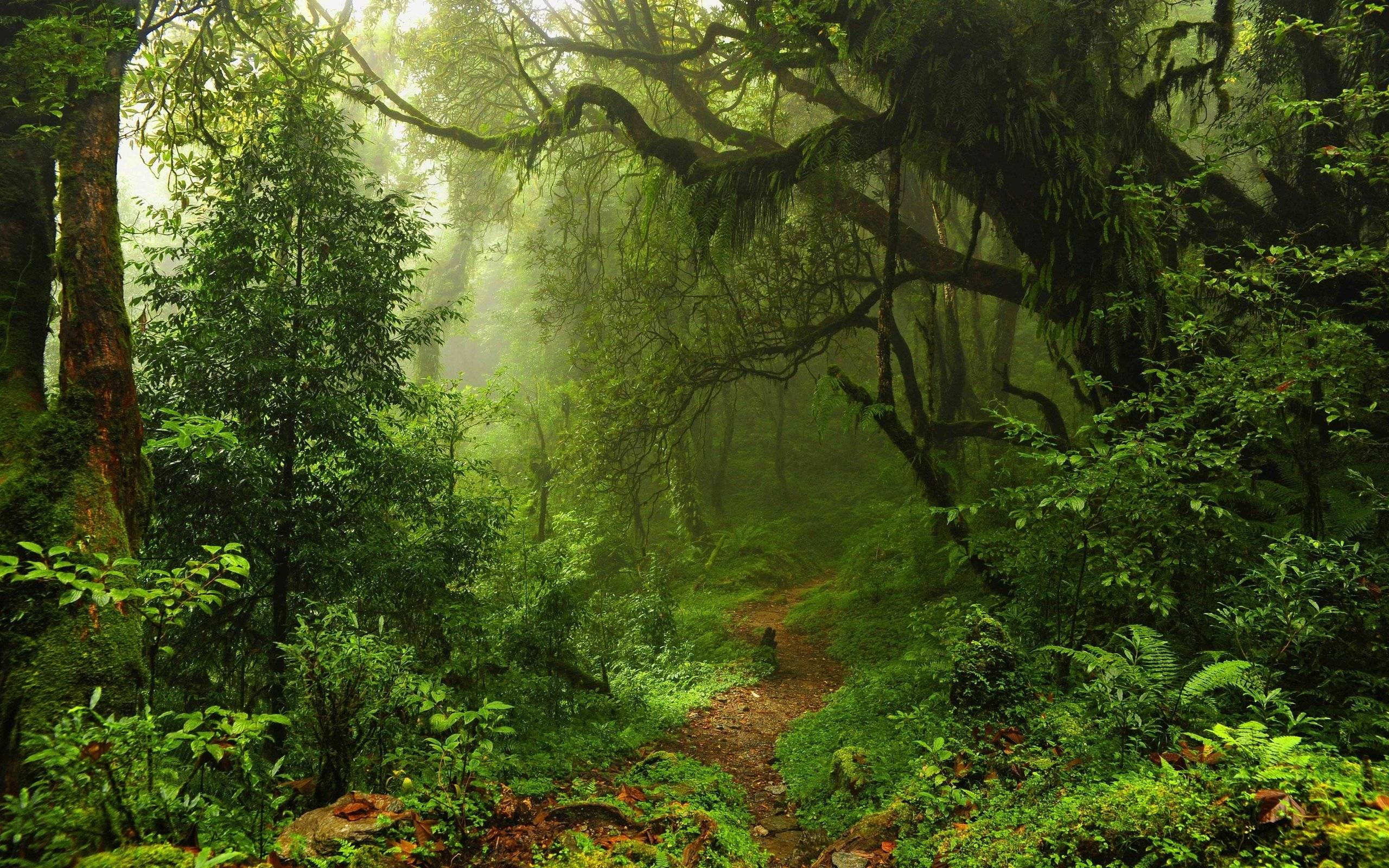 Jungle Wallpaper Desktop: Jungle Background ·① Download Free Beautiful HD Wallpapers