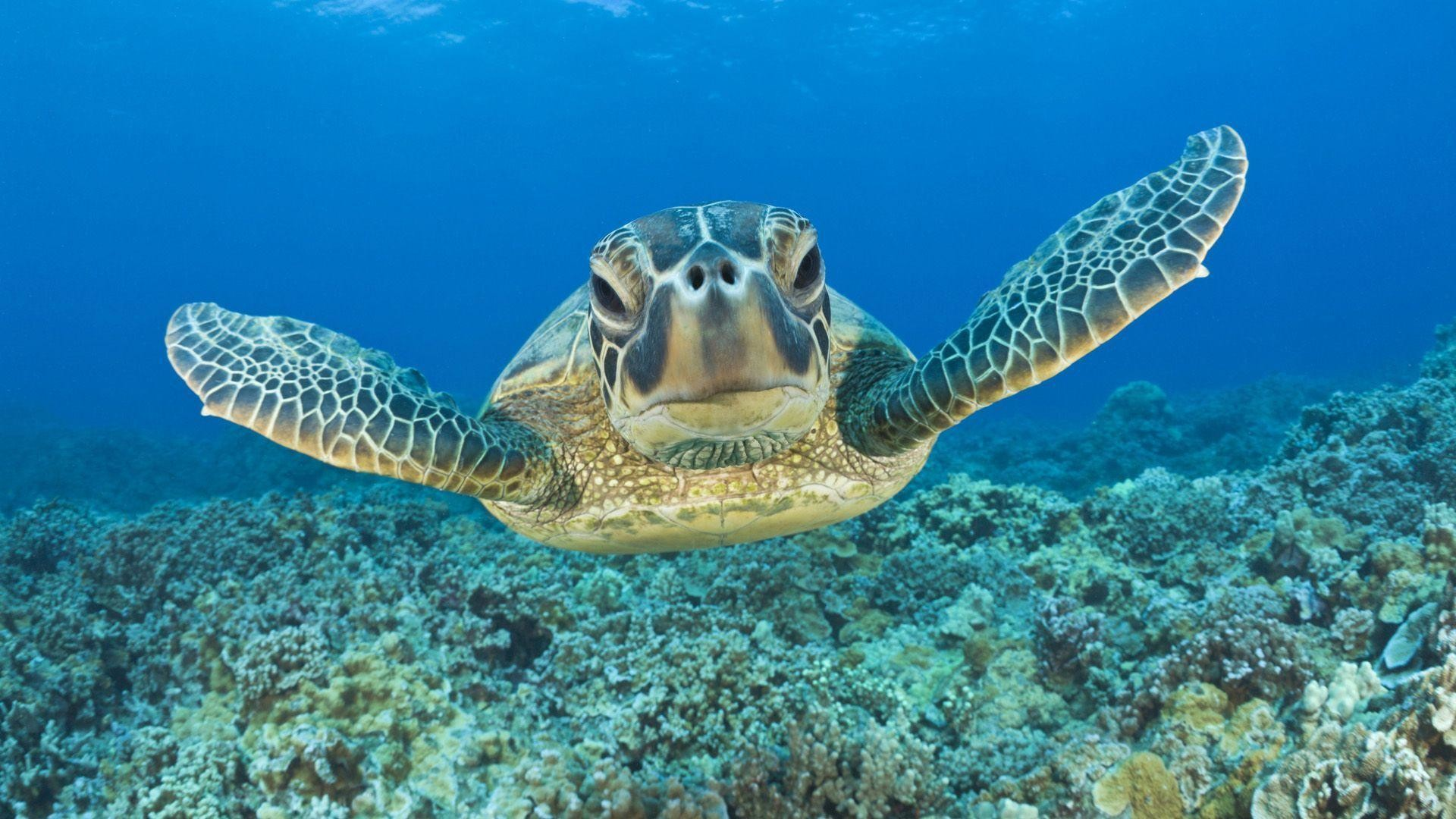 Funny 3d Animal Turtle Wallpapers Hd: Cute Turtle Wallpaper ·①