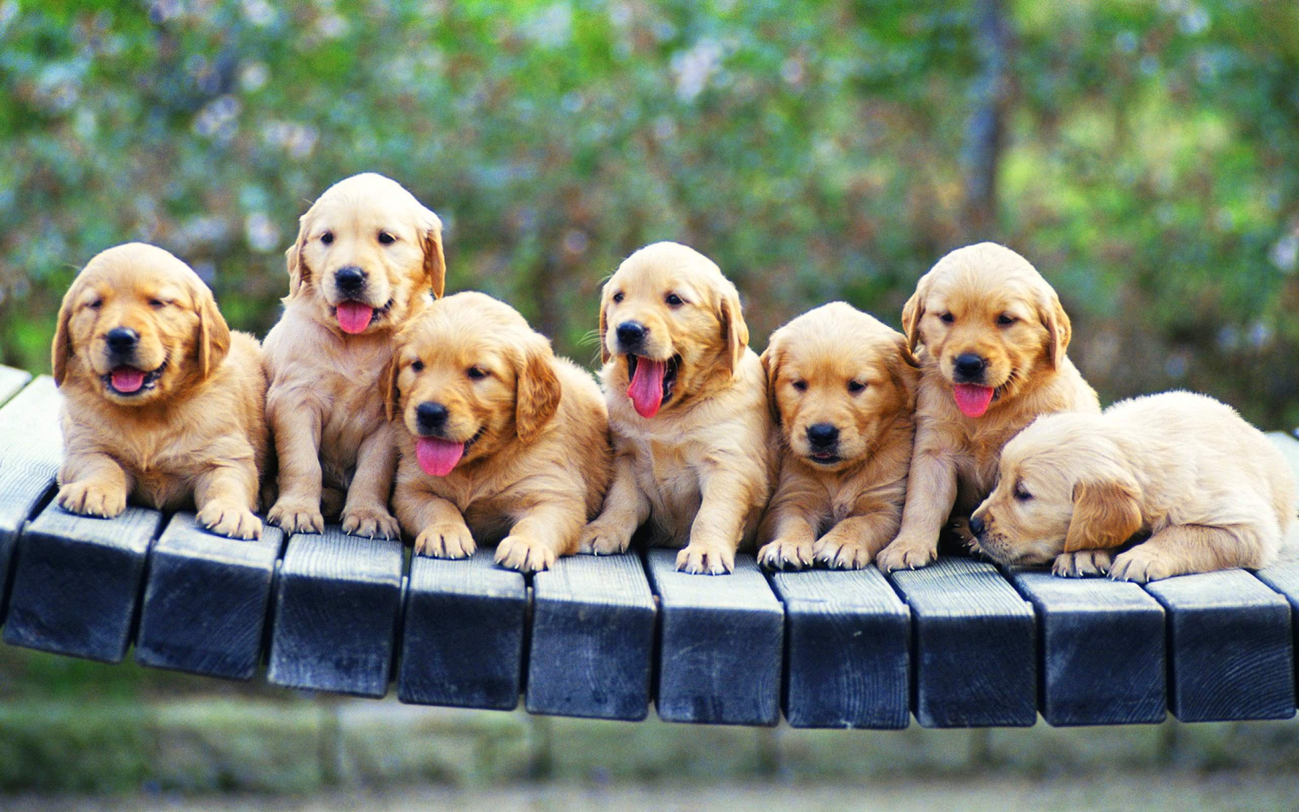 Puppy Wallpaper ① Download Free Cool Backgrounds For Desktop
