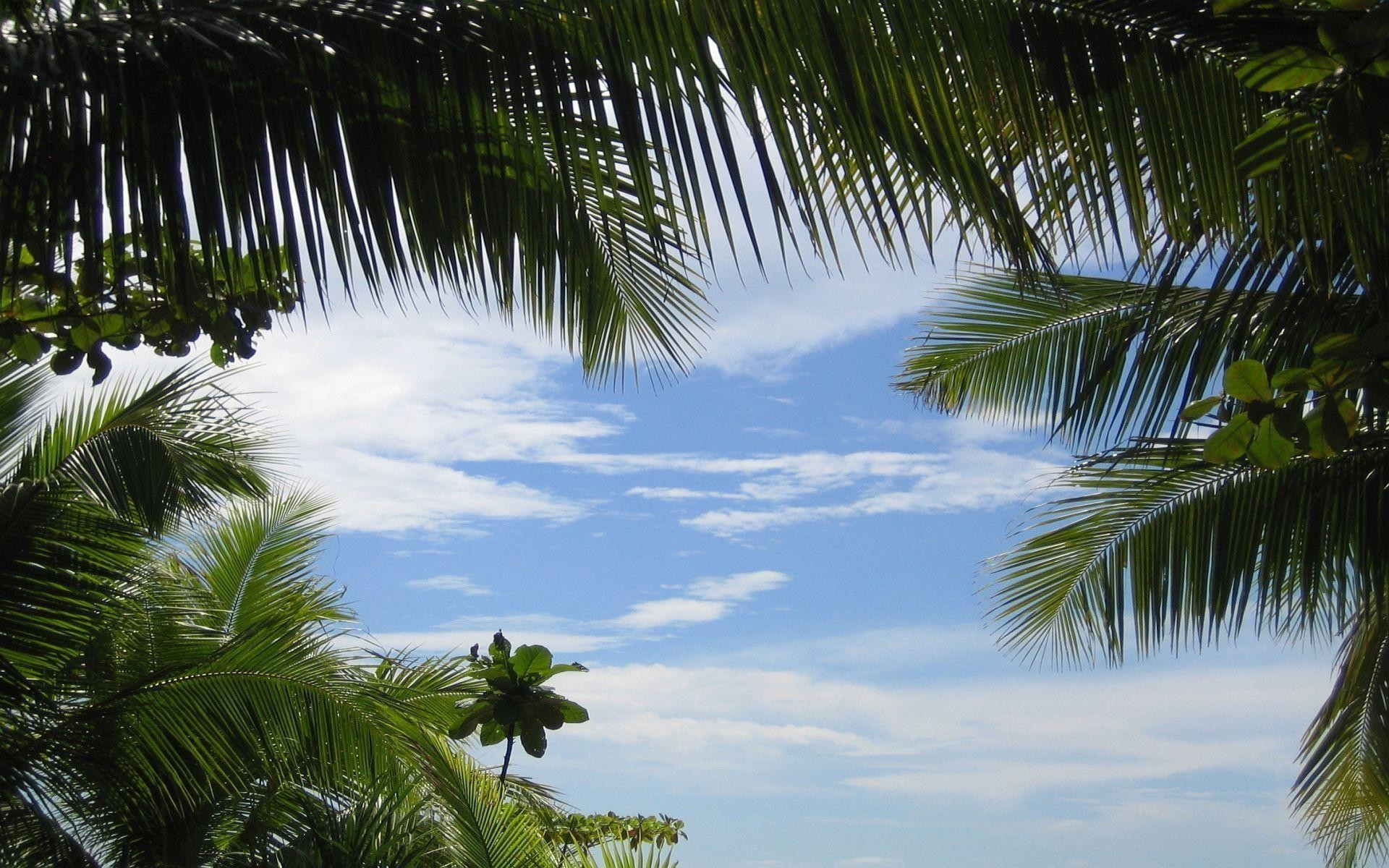 Tropical Background: Tropical Background Images ·① WallpaperTag