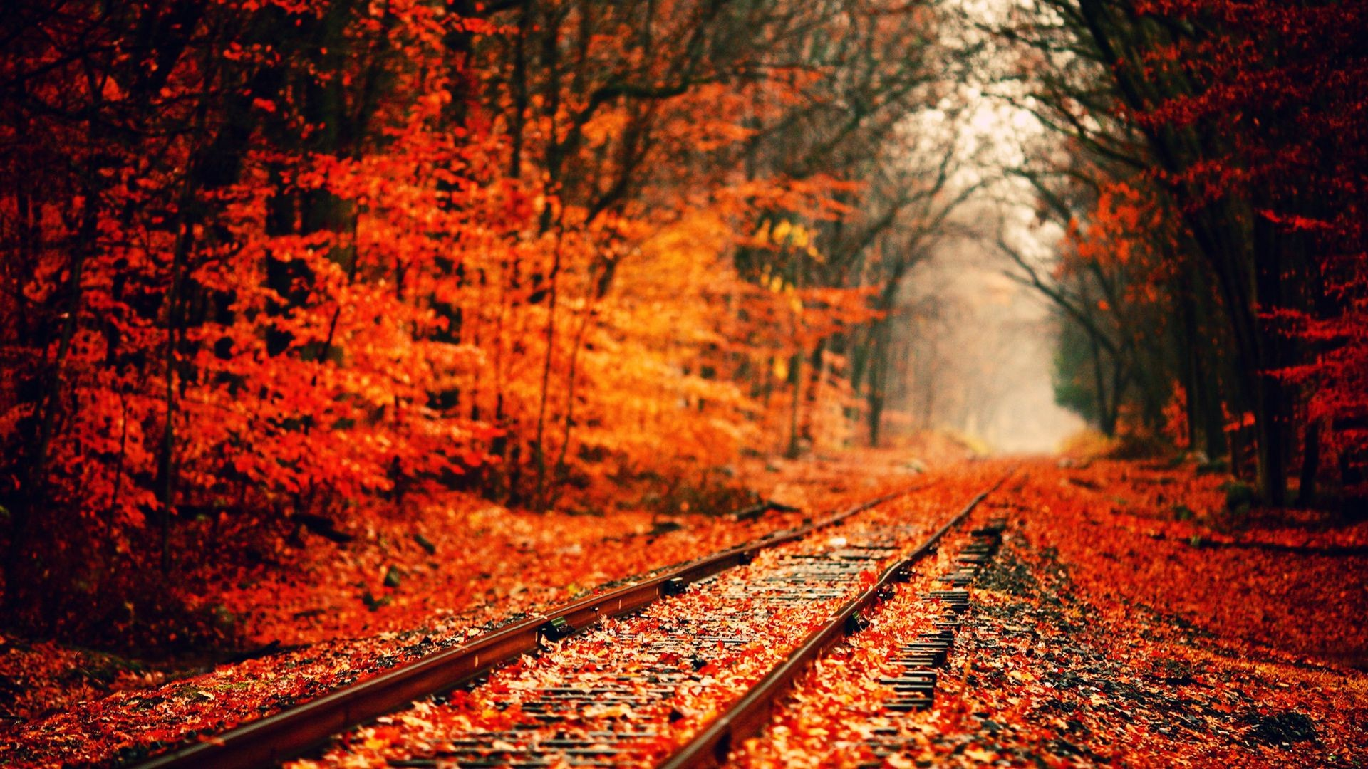 1920x1080 Autumn Tumblr Wallpaper Background Ypz Px 41447 KB Nature Cute Desktop Fall