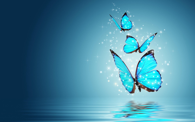Pretty Butterfly Wallpaper 1