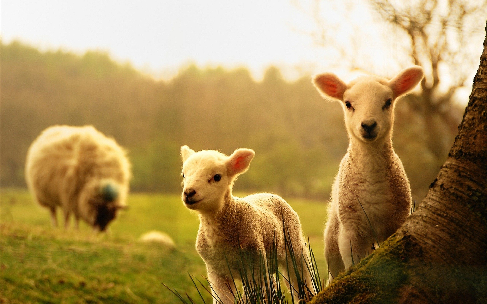 Wallpapers For Baby Animal Backgrounds