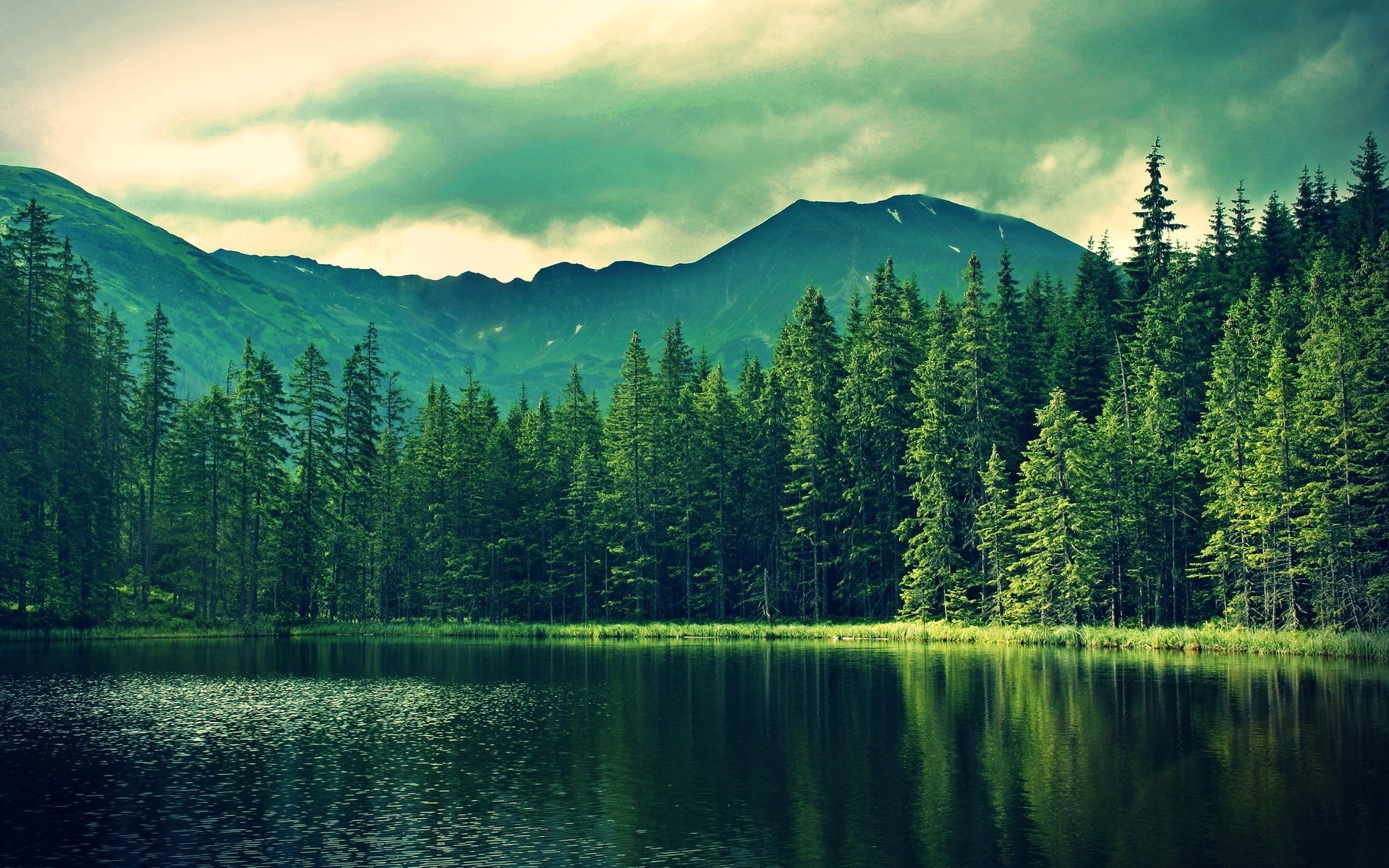 forest hd wallpaper ·①