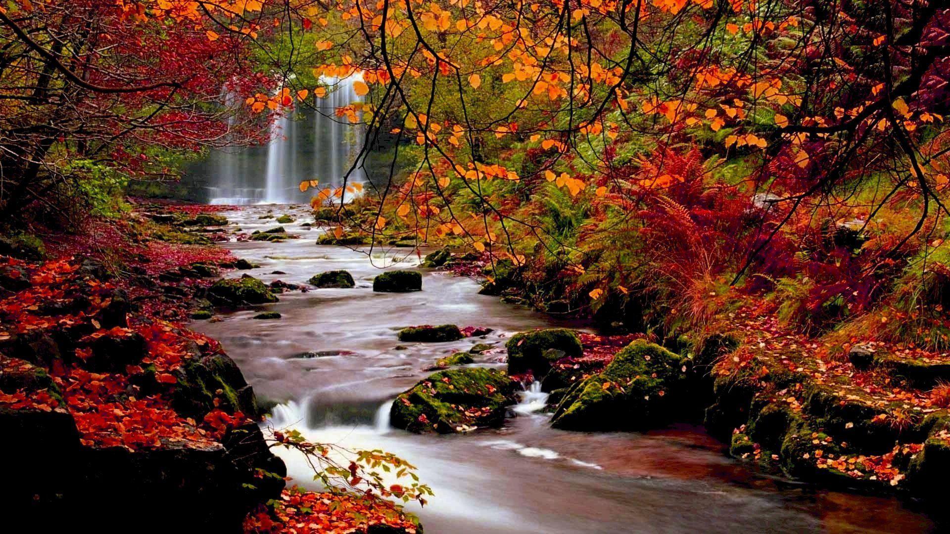 Autumn Wallpaper Backgrounds ①