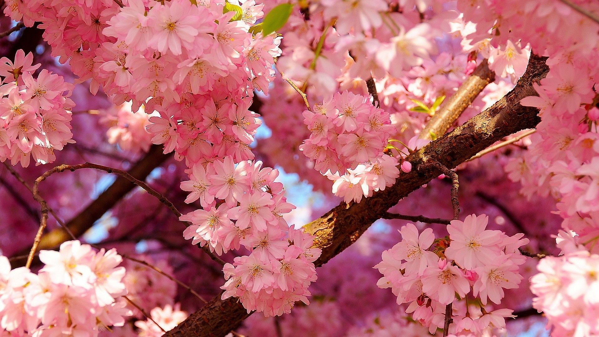 Spring background download free beautiful hd backgrounds for desktop mobile laptop in any - Backgrounds springtime ...