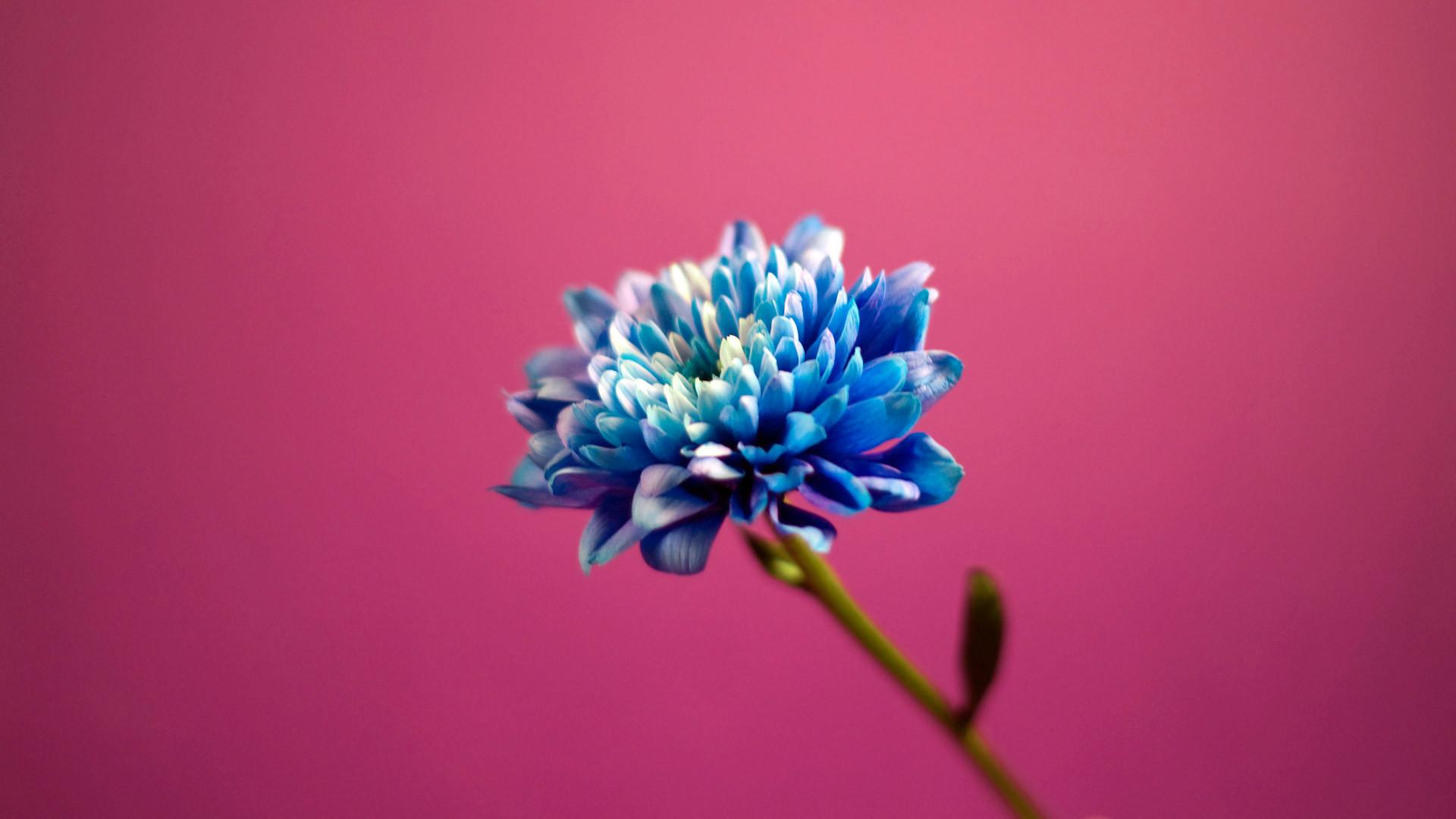 pink flower wallpaper background wallpapertag