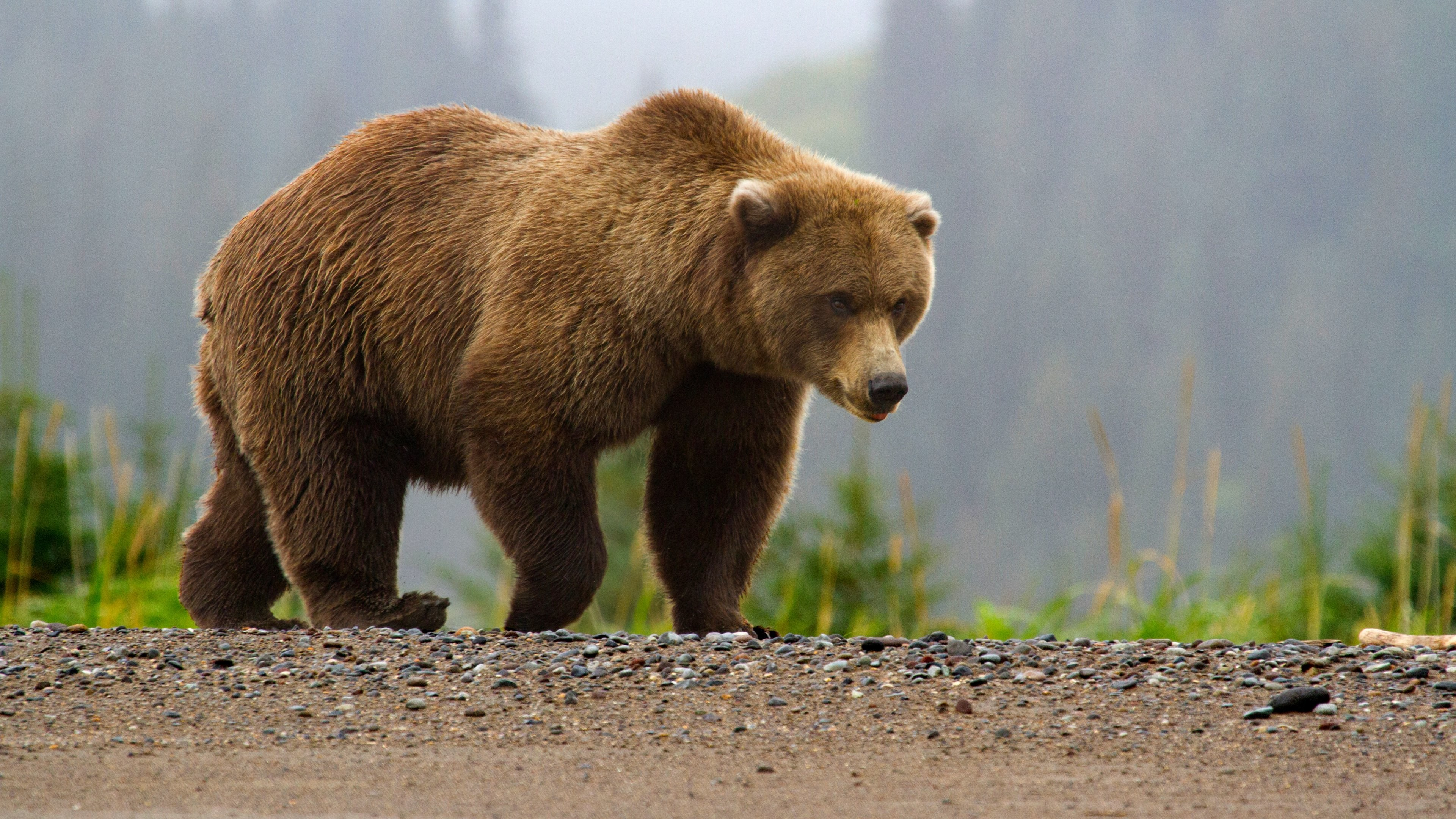 Spiders at Spiderzrule - the best site in the world about Photos of brown bears