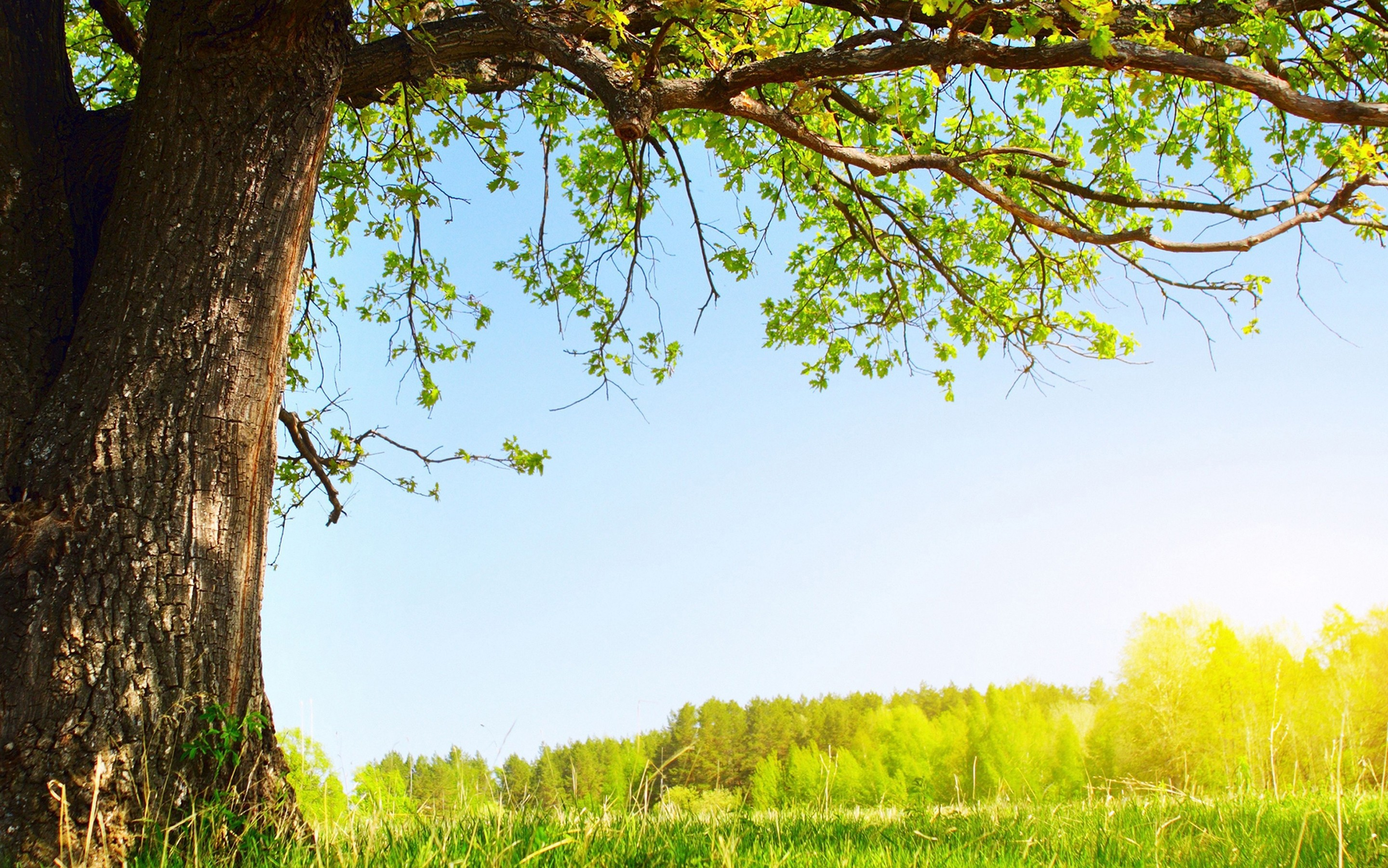 Tree Background ·① Download Free HD Backgrounds For