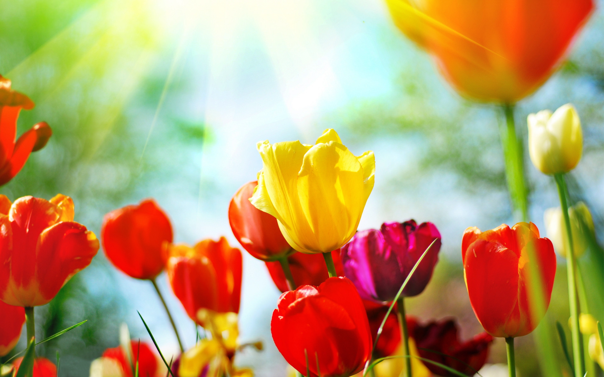 Spring Flowers Background Desktop ·① WallpaperTag