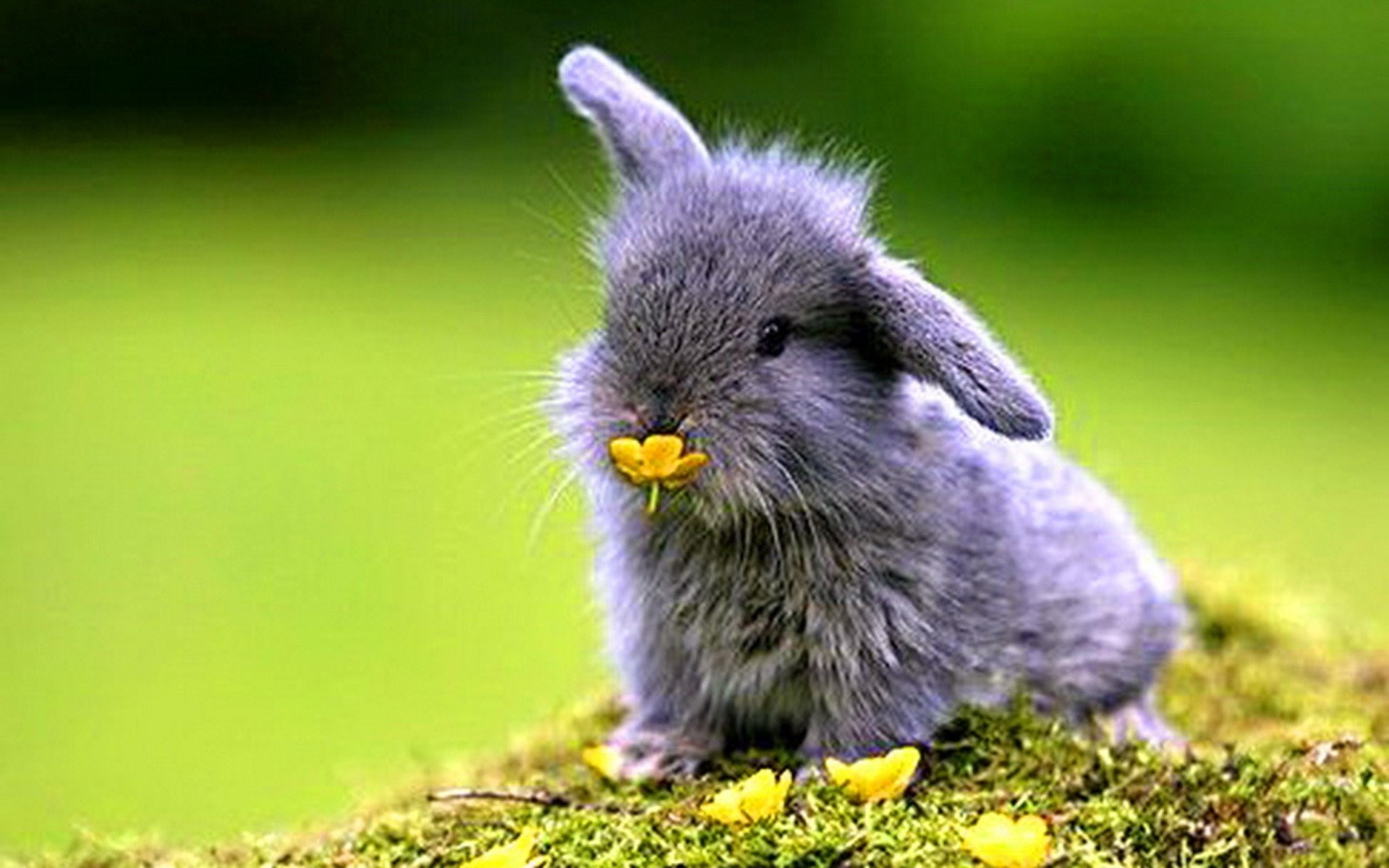 Cute Bunny Wallpapers 1