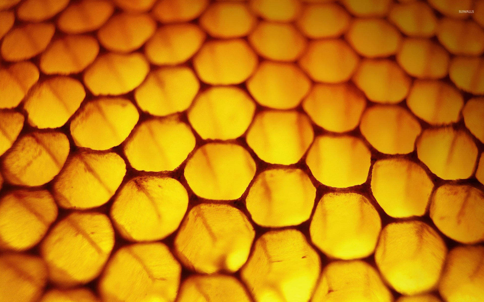 Honeycomb wallpapers background images page 6 - 1920x1200 Honeycomb Wallpaper 1920x1200 Jpg