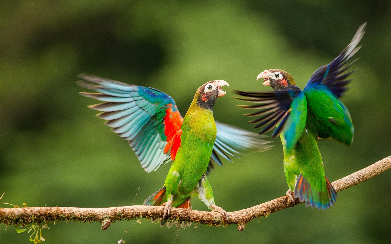Wallpapers Love Birds Desktop Wallpapers: Love Birds Wallpapers ·① WallpaperTag