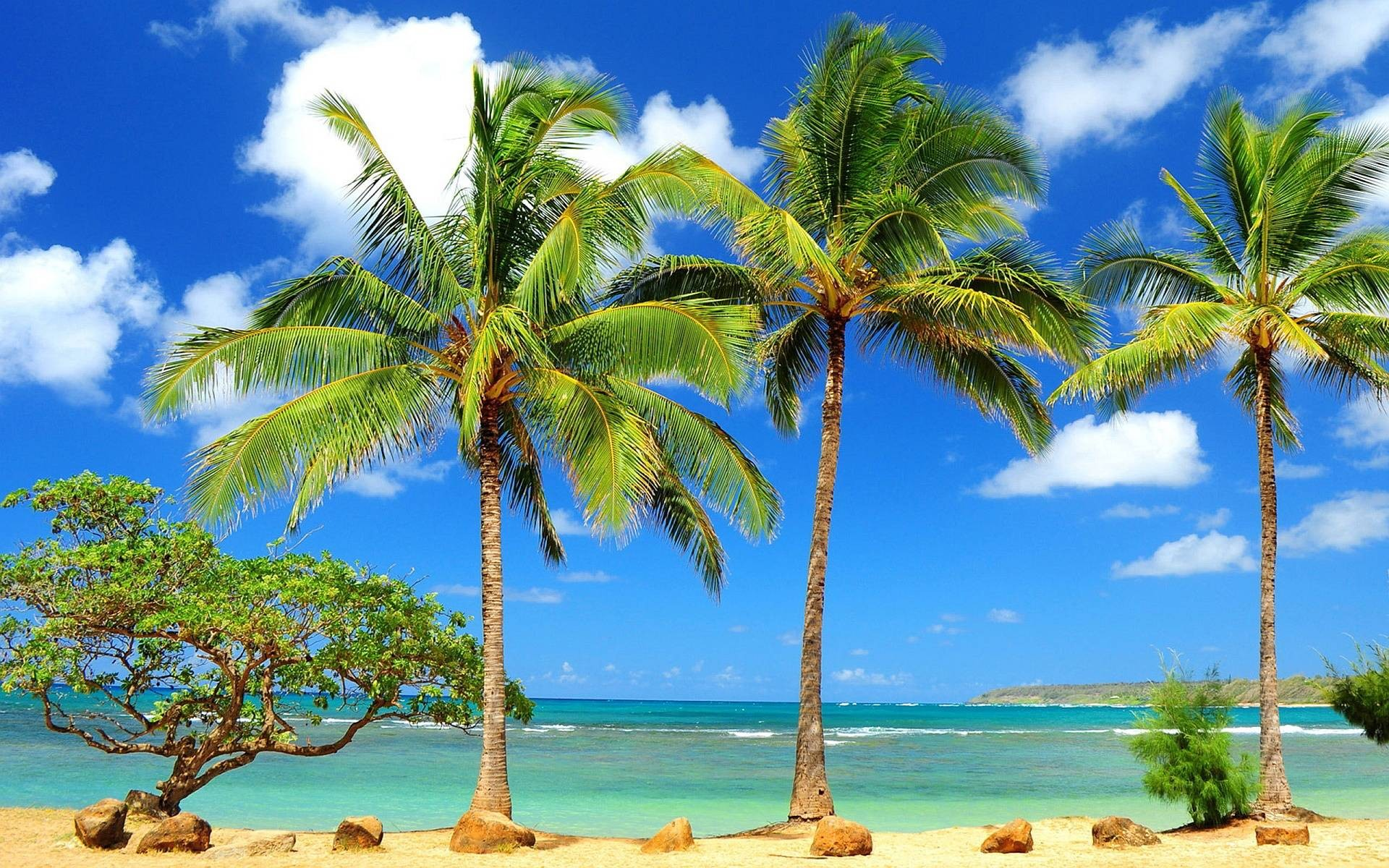 Palm tree background download free hd backgrounds for desktop and mobile devices in any - Palm tree wallpaper for android ...