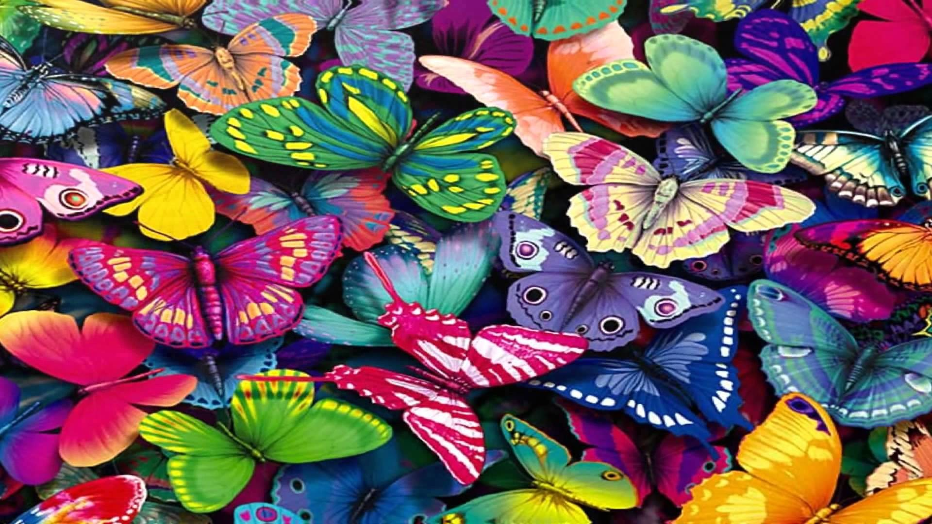 Butterfly Wallpaper Images ·① WallpaperTag
