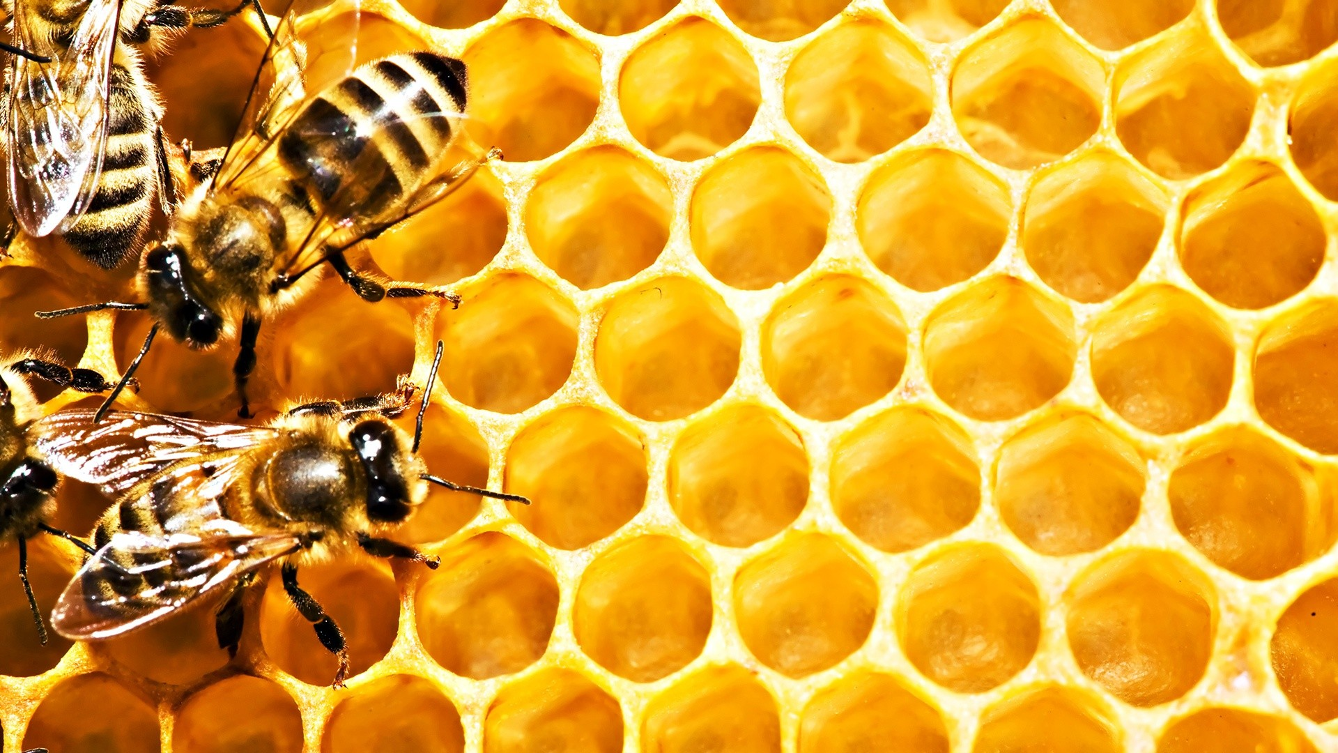 Honeycomb wallpapers background images page 6 - 1920x1080 Honeycomb Background 1920x1080 For Windows