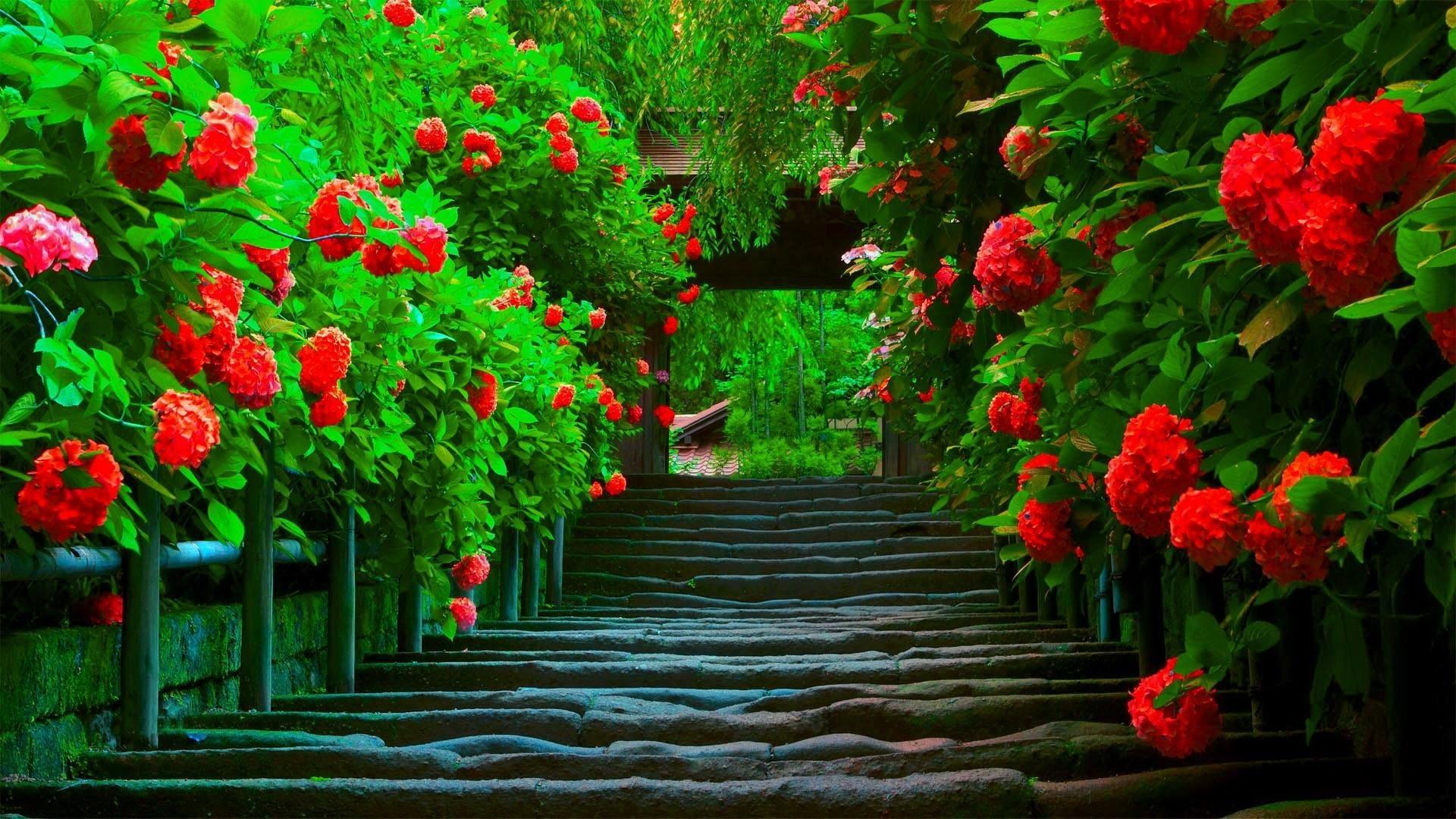 Must see Wallpaper High Resolution Spring - 514925-spring-nature-wallpapers-1920x1080-high-resolution  Snapshot_512095.jpg