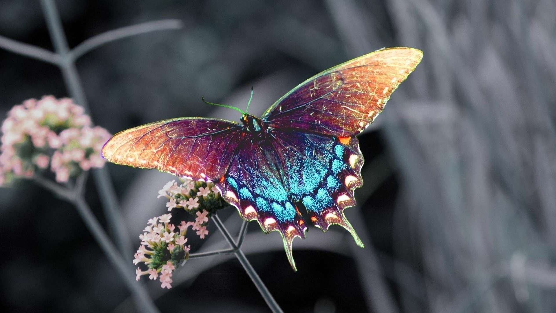 Butterfly - photo#38