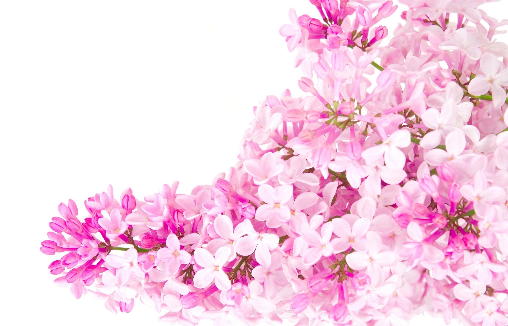 Pink background Tumblr ·① Download free amazing HD ...
