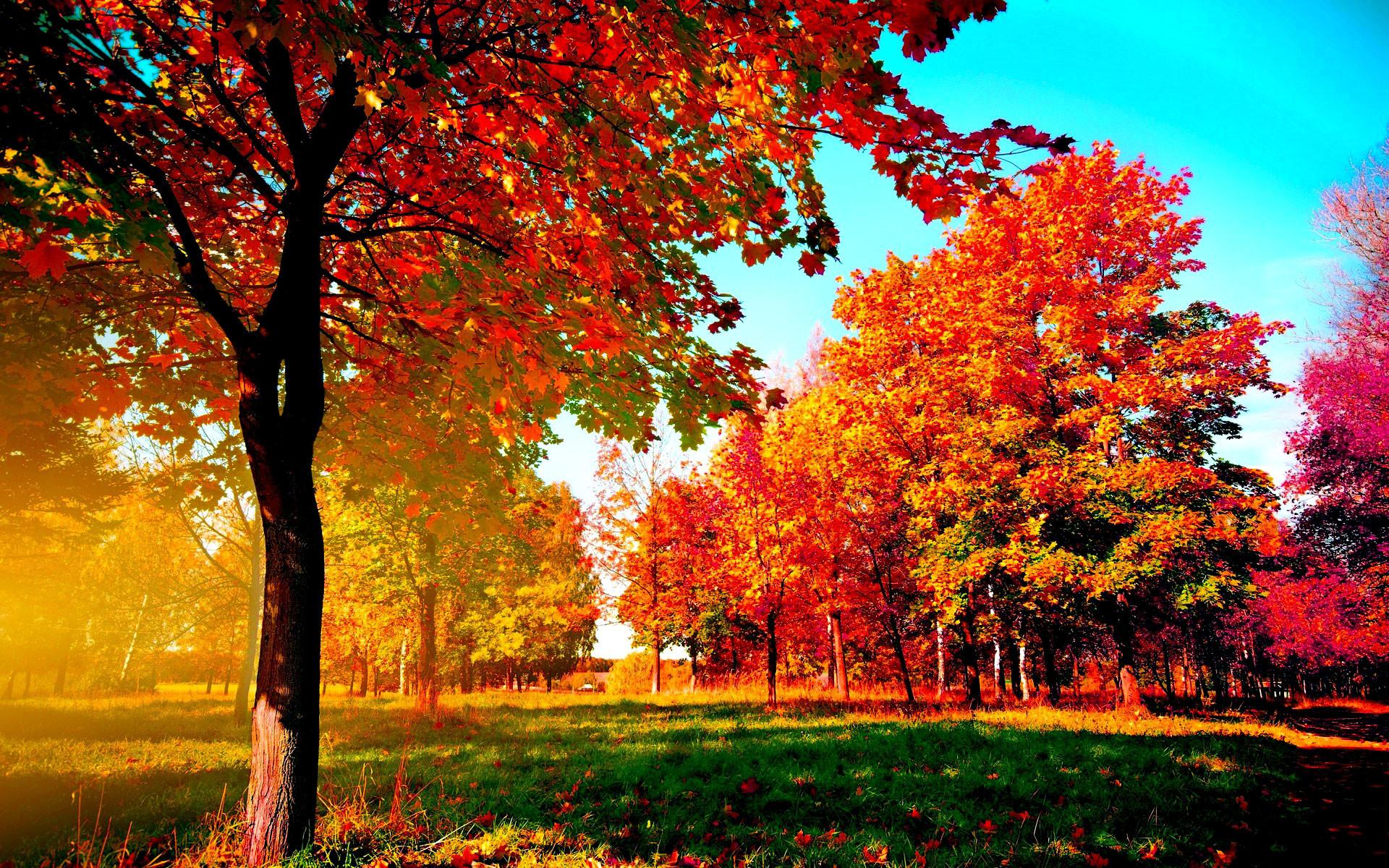 Fall Iphone Wallpaper Hd: Wallpaper Autumn ·①