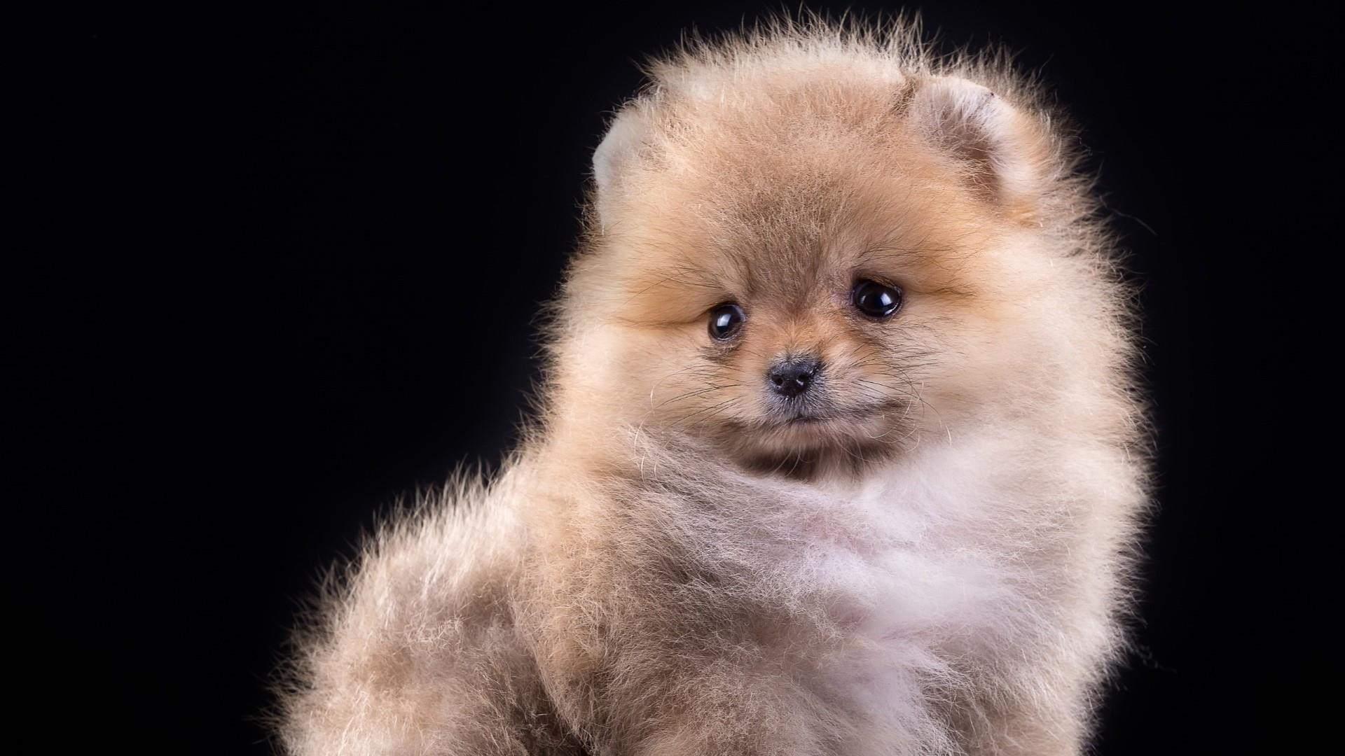 1920x1080 Cute Puppy Wallpaper 25746