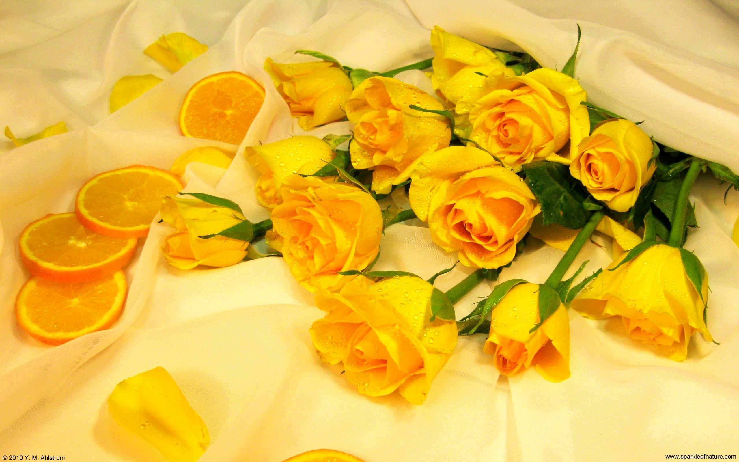 yellow rose wallpaper ·①