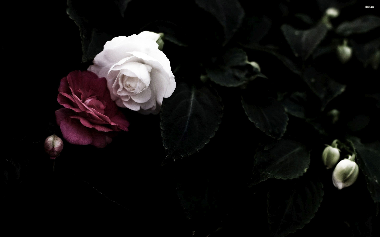 белые розы на черном фоне обои на рабочий стол № 133691  скачать