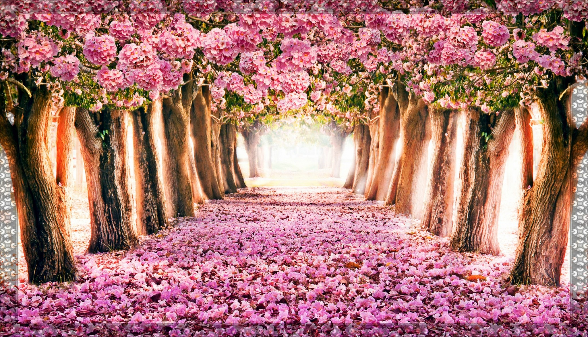 Spring Computer Backgrounds ·① WallpaperTag