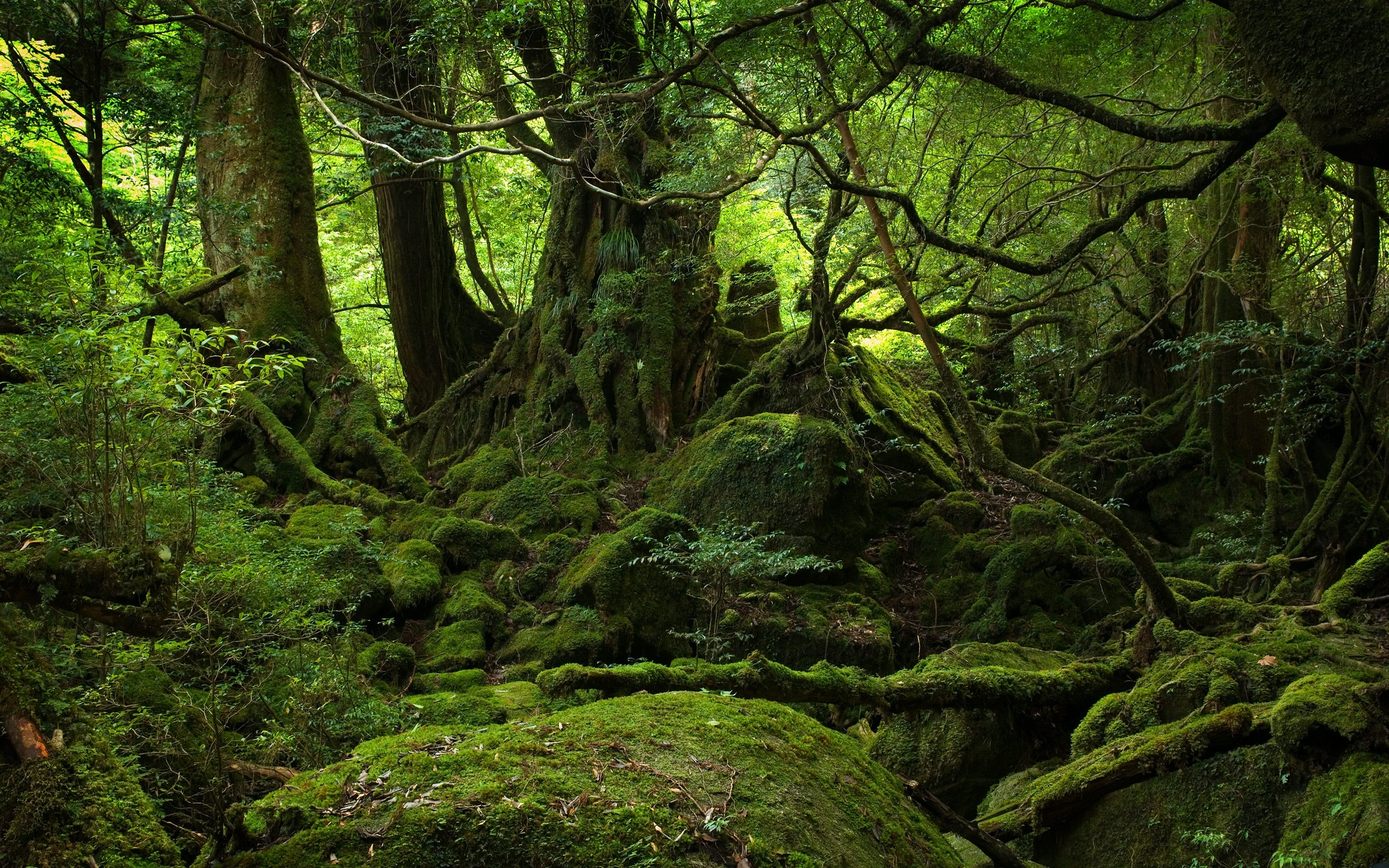 forest desktop background