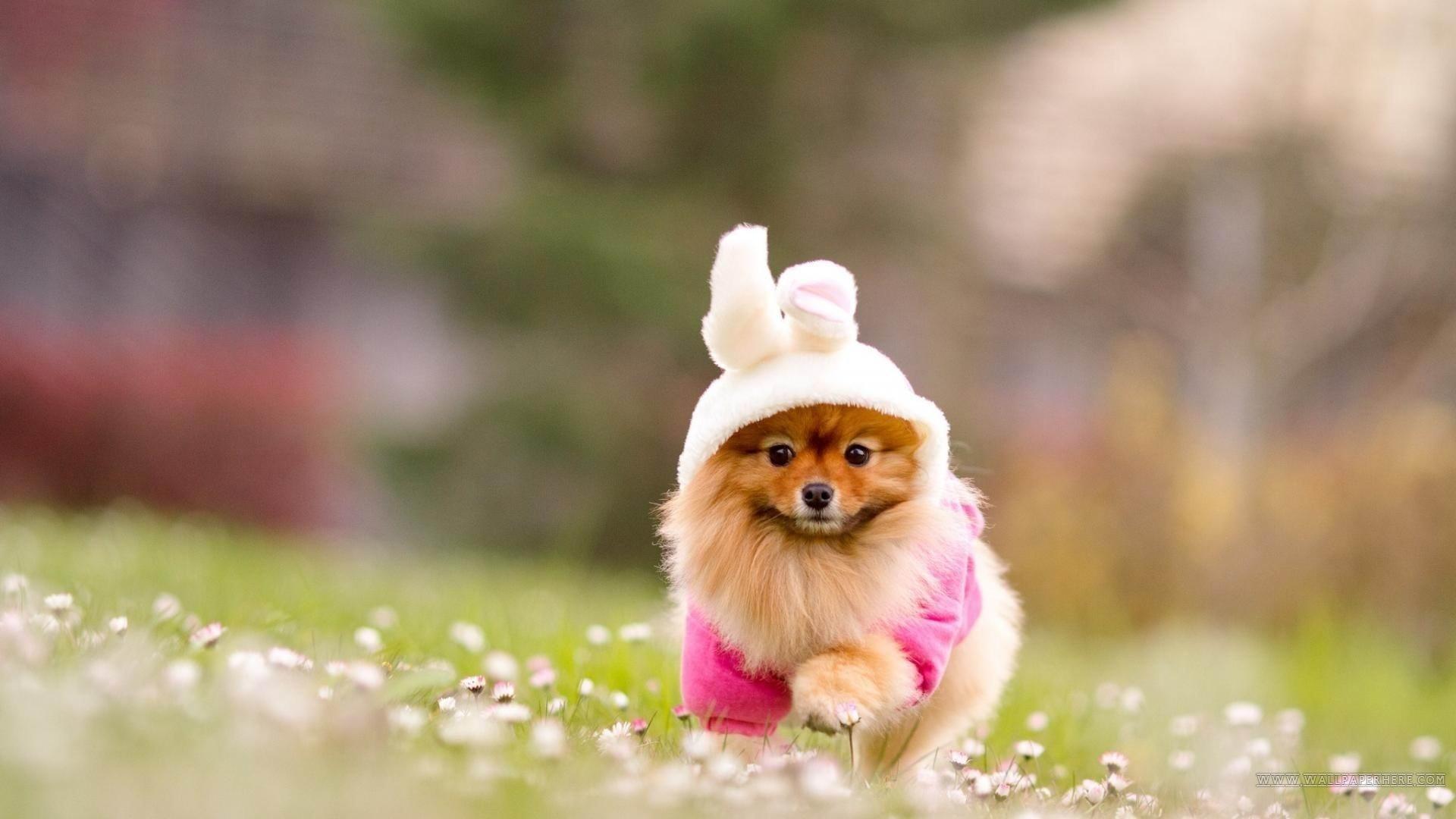 cute puppy desktop backgrounds