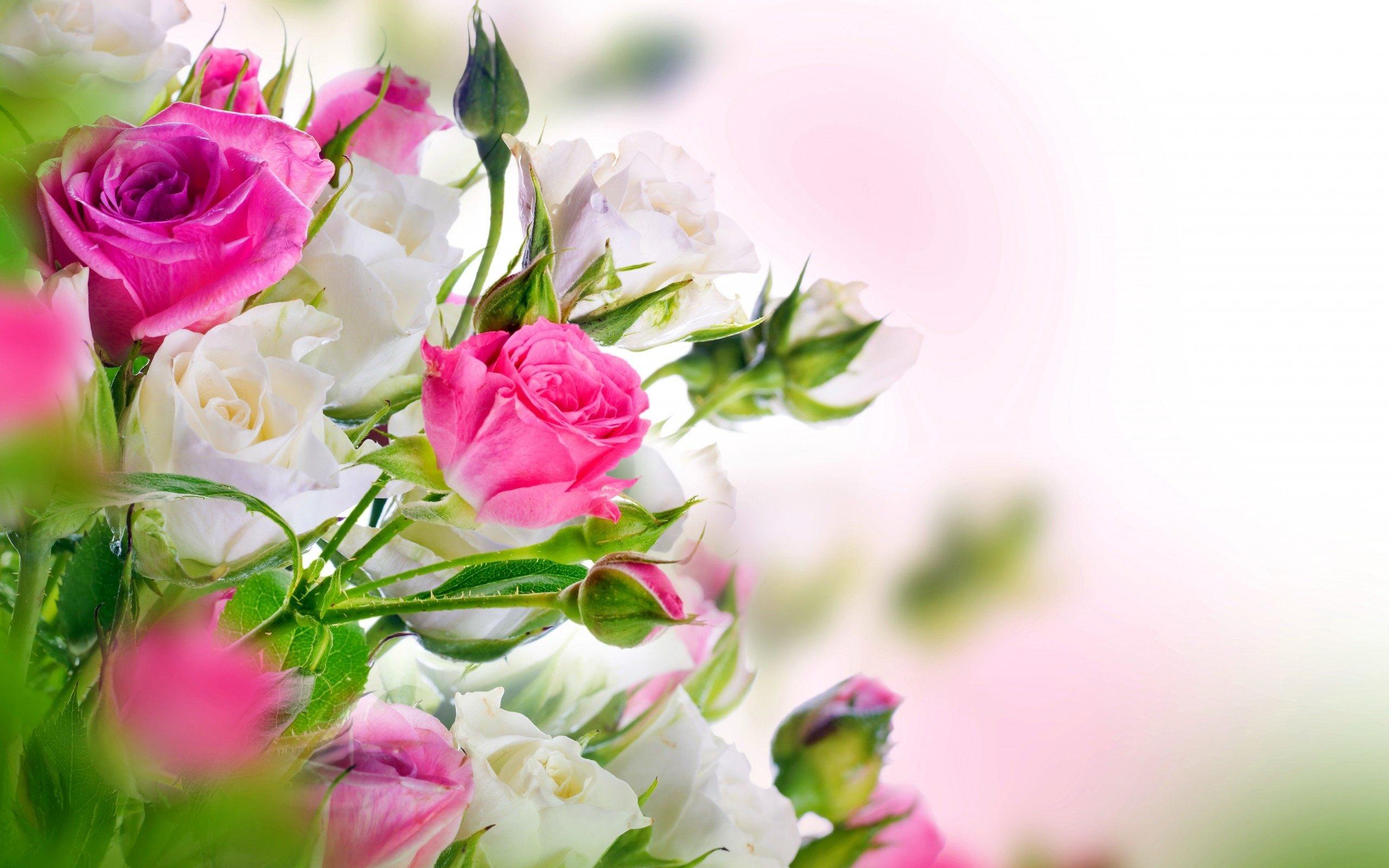 desktop wallpaper rose flowers: White Rose Wallpaper ·①