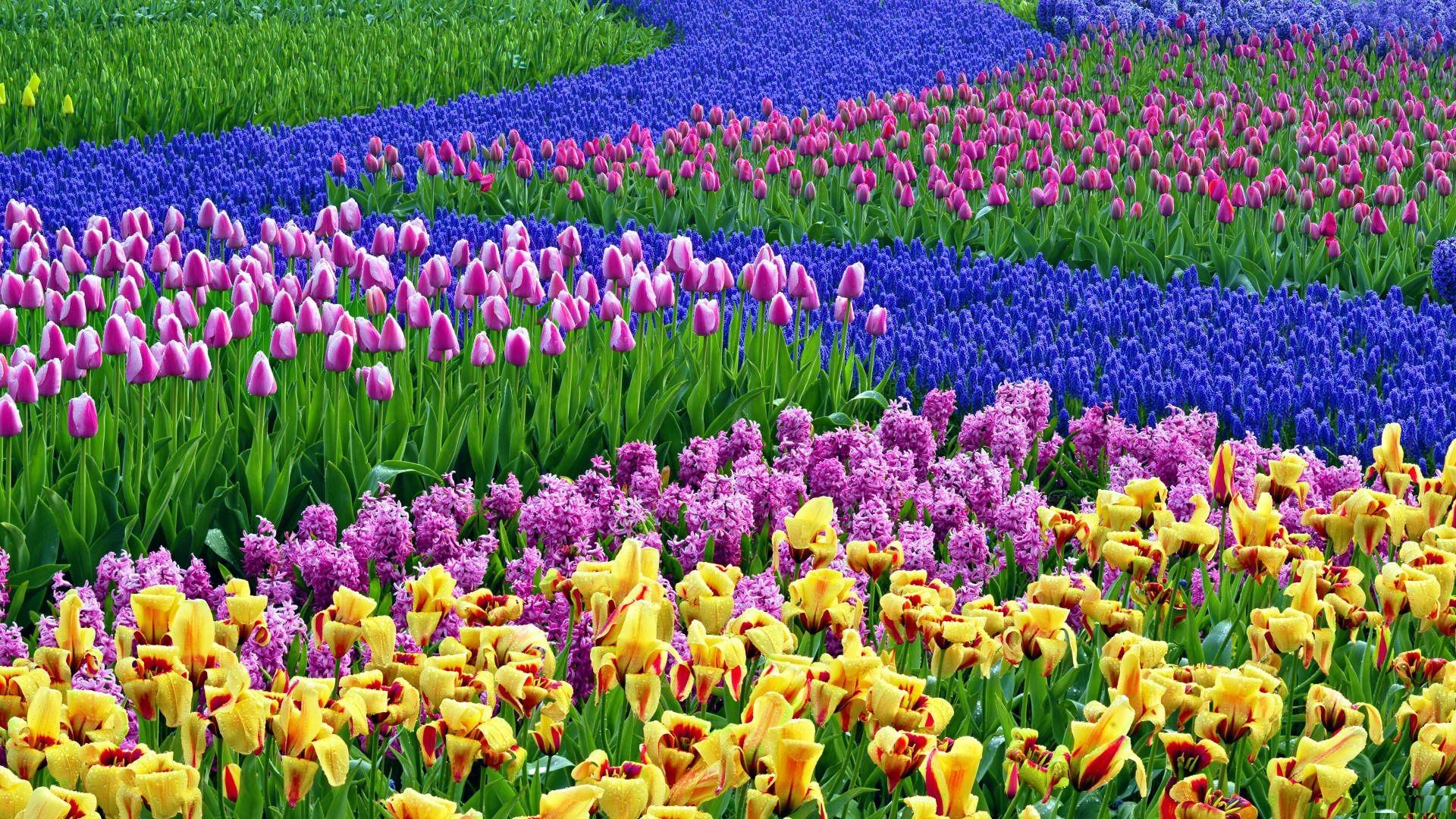 Spring Flower Desktop Background Wallpapertag